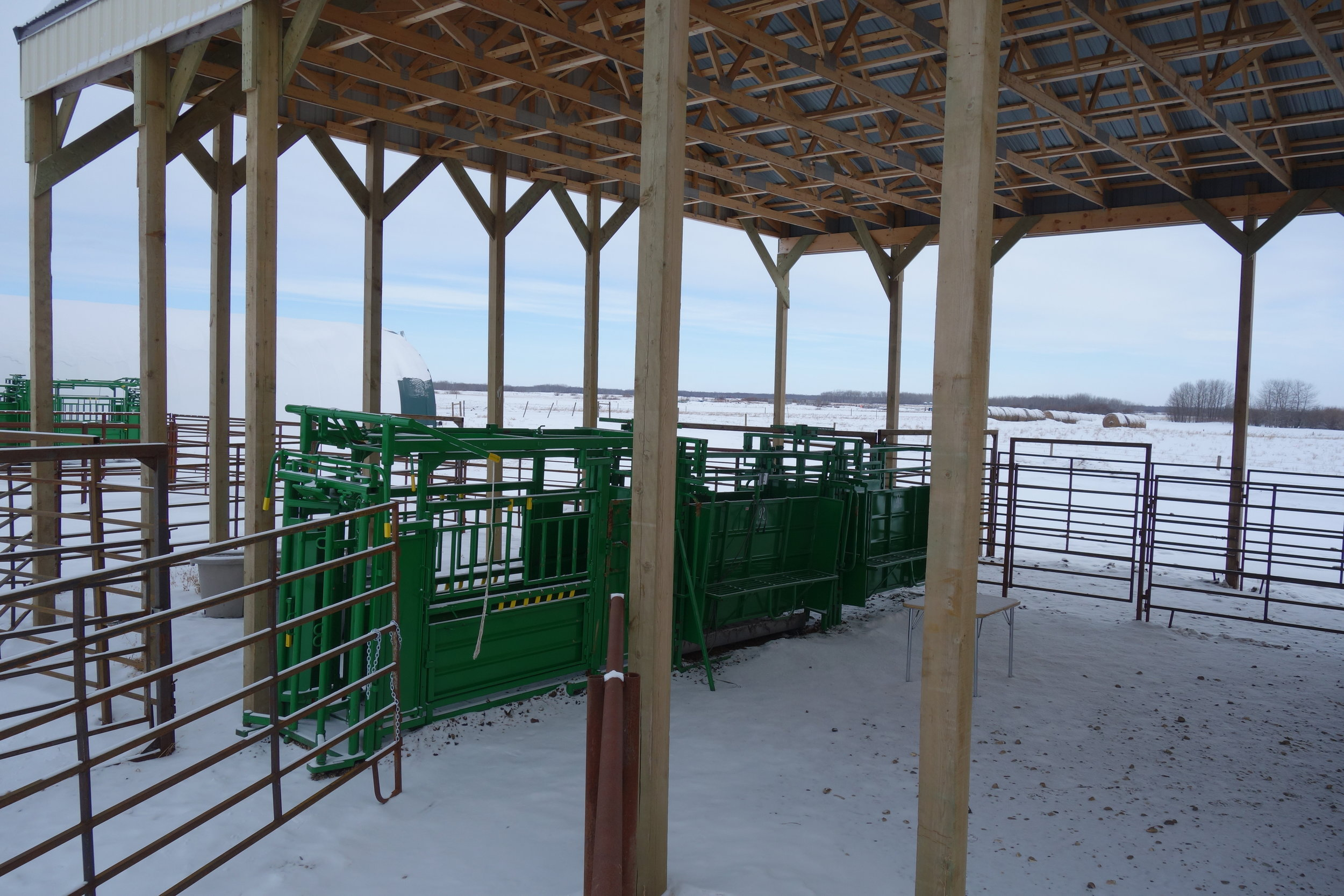 Brookdale Real Chute System and Corral