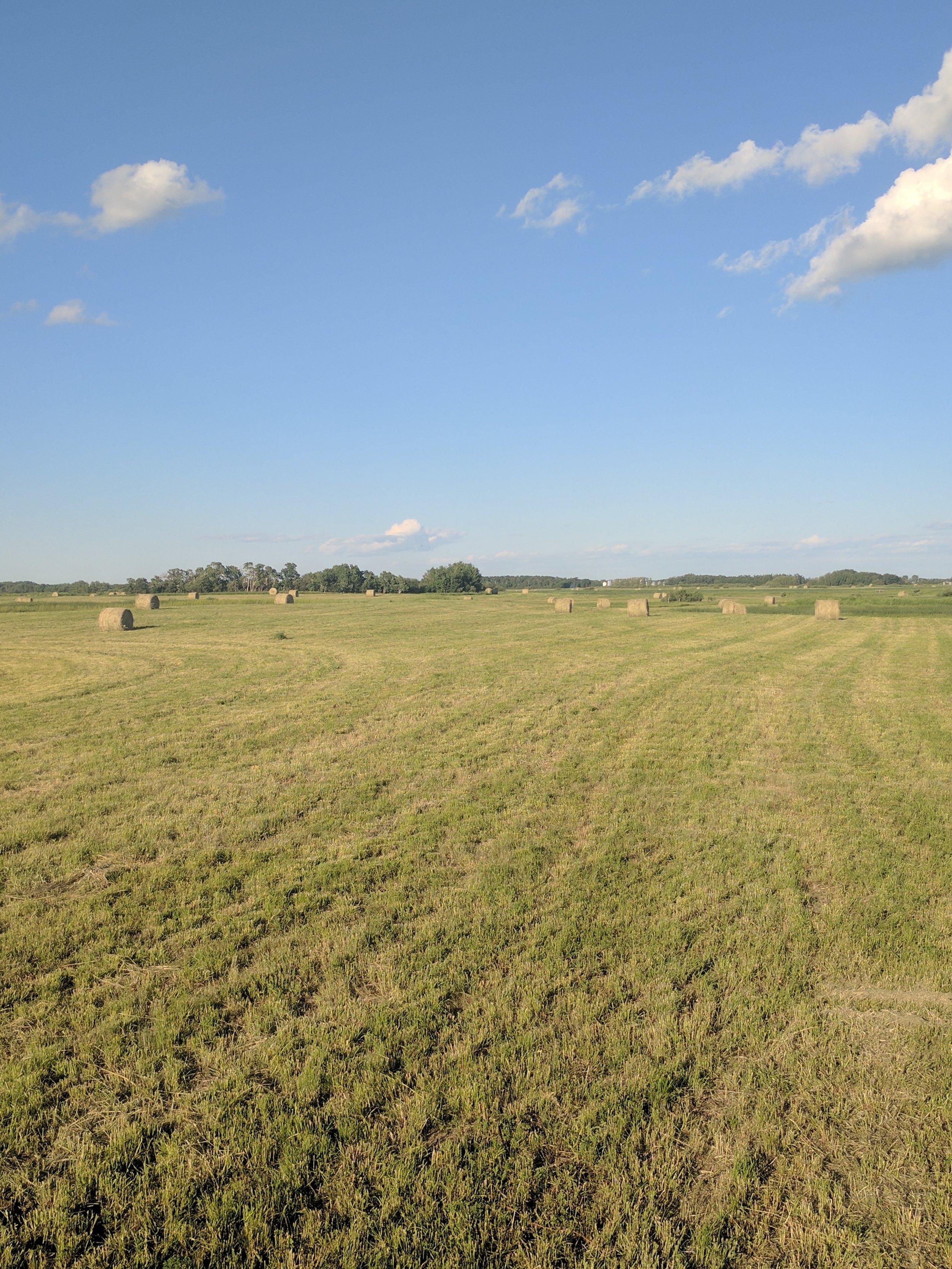 Brookdale farm first hay cut 2017