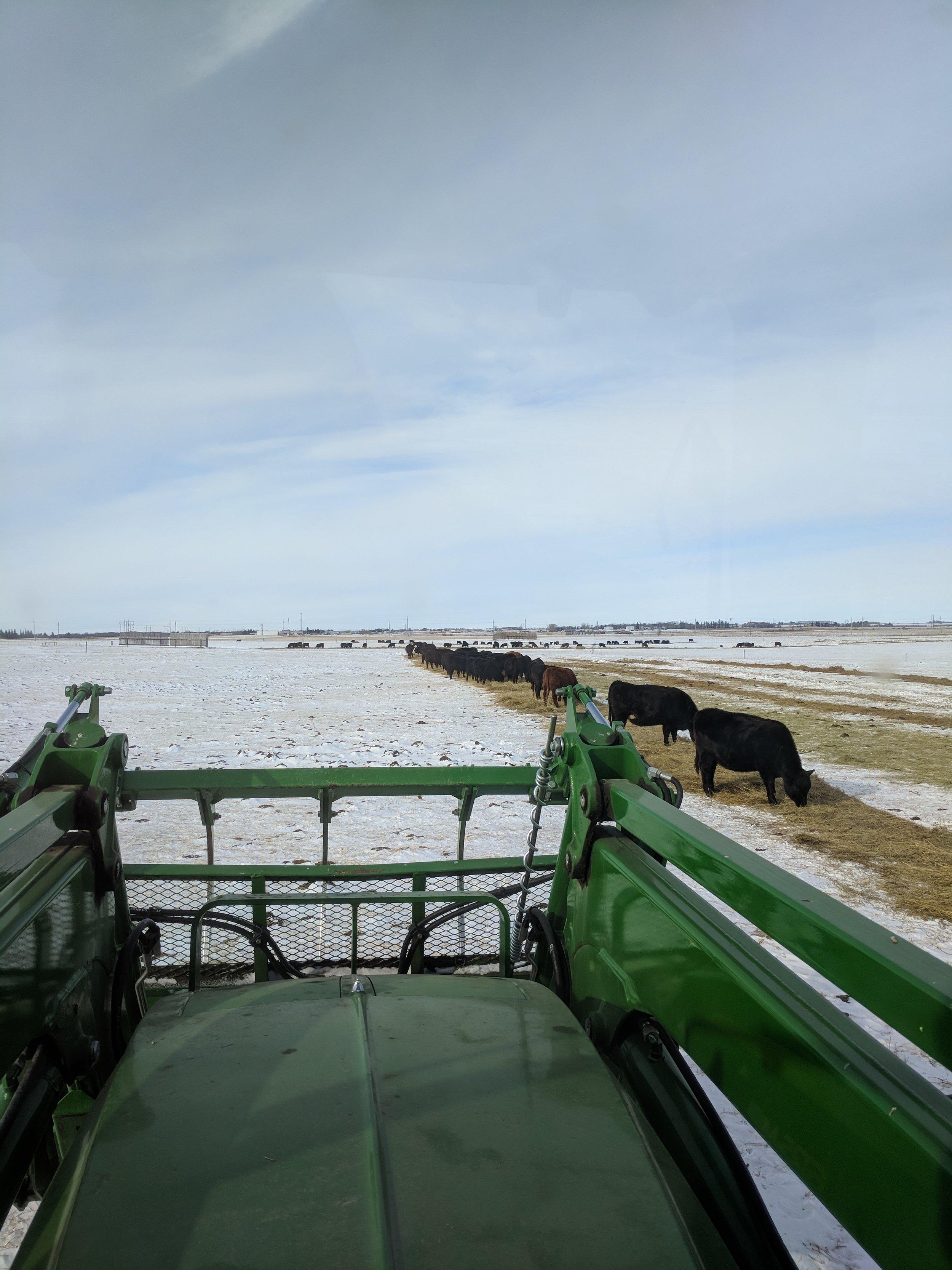 Johnson Farm winter feeding 2018