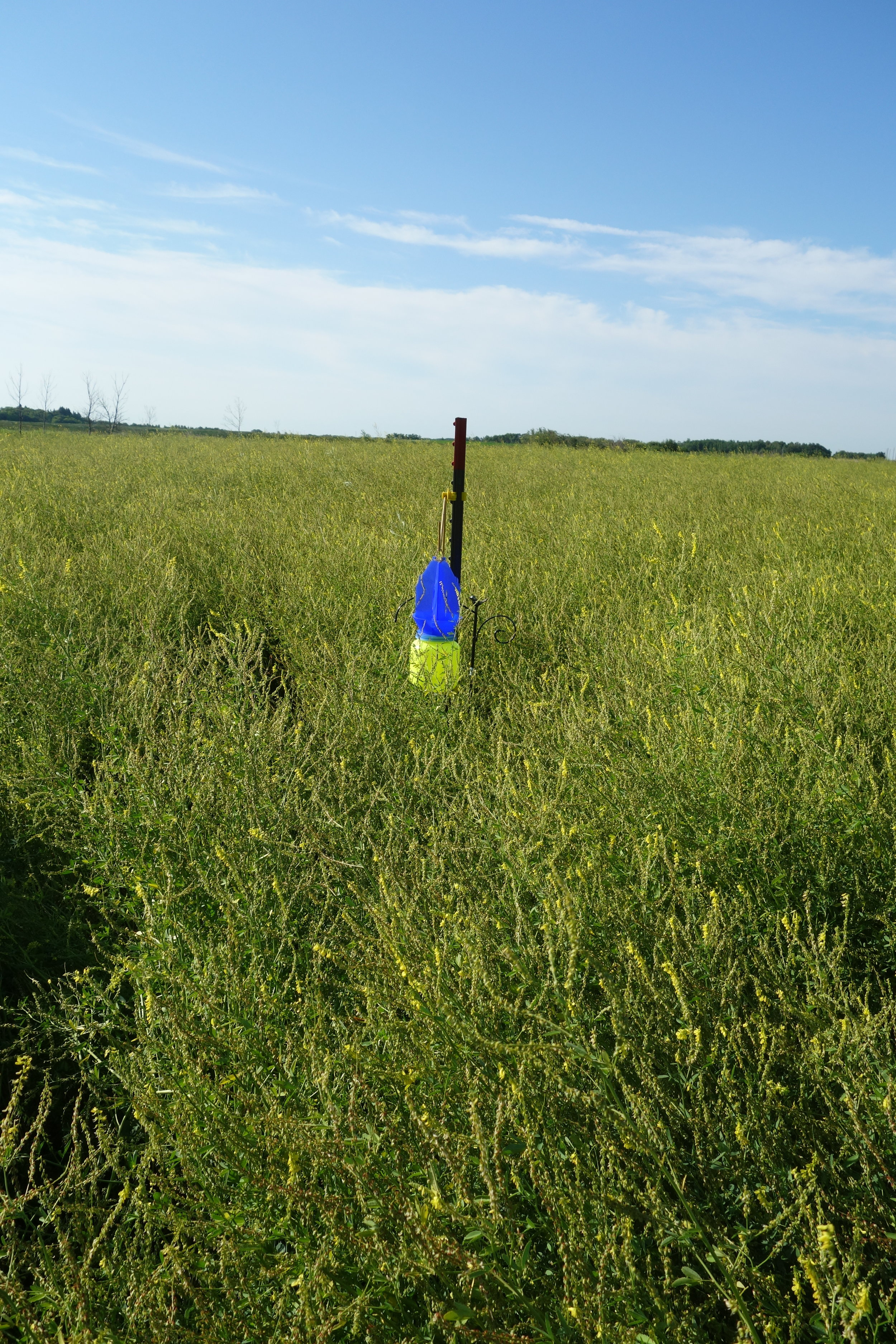 Pollinator collection with the blue vane trap at Brookdale farm