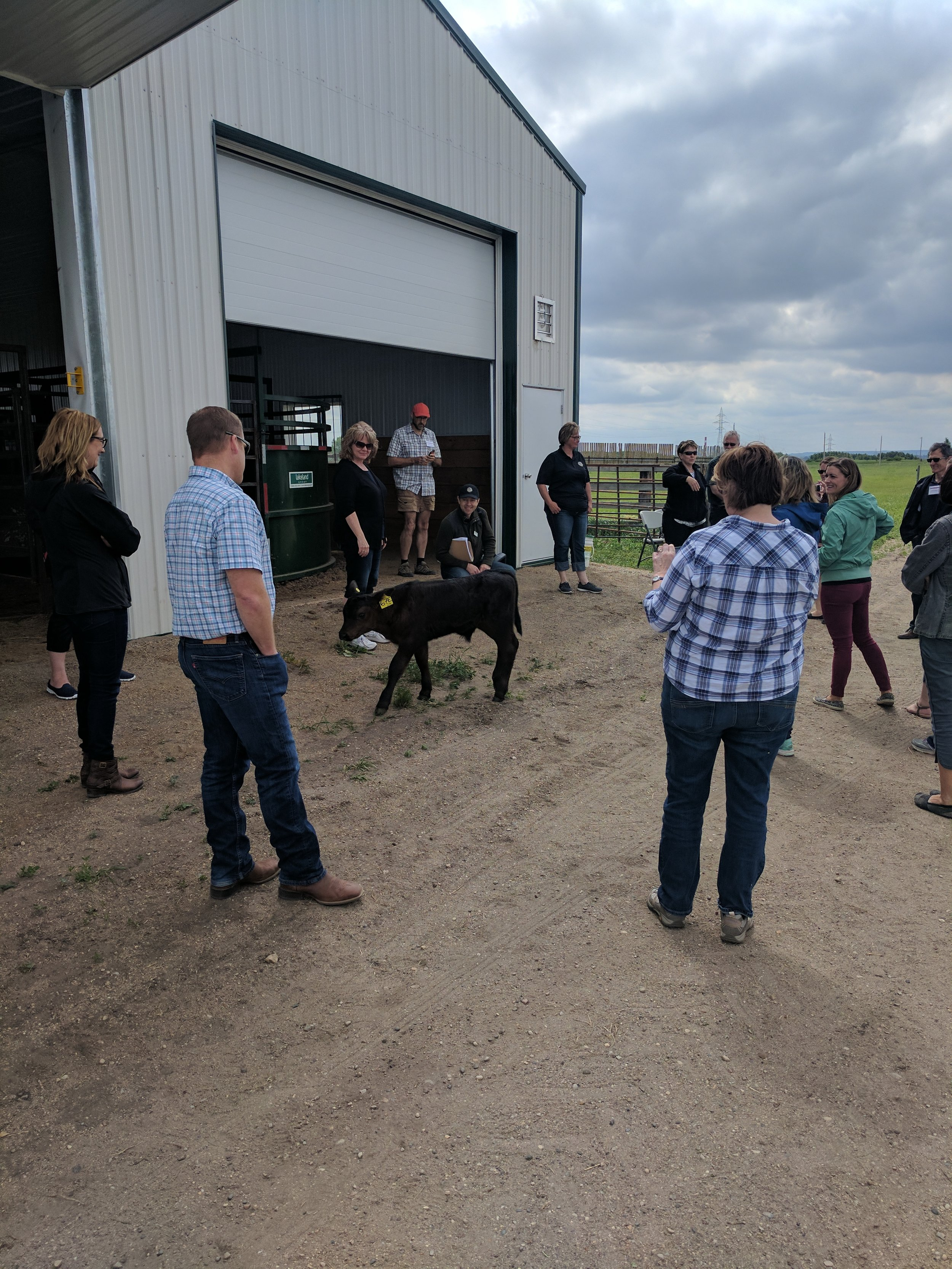 Farm Writers Tour Participants at Johnson Farm with a MBFI bottle fed calf 2017