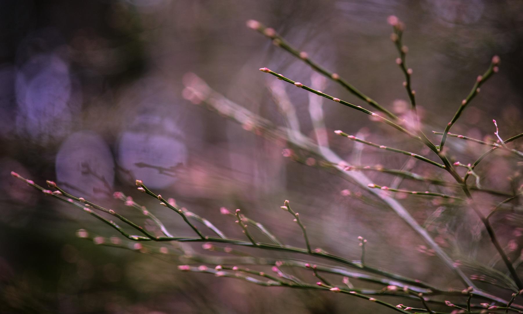 Sev.photography-Website-41.jpg