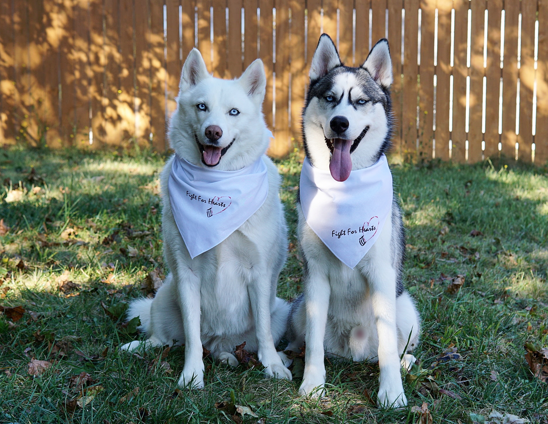 Zana  is a 6 year old, (white coat/blue eyes)female Siberian Husky who loves interval training, and cross-country running (in the wilderness). Zana loves eating bananas. Zana has been diagnosed with Lyme Disease, which has slowed her down, but she doesn't let that obstacle limit her activity and diet. Zana is very gentle and great with kids!   Pablo  is a 9 month old male Siberian Husky.He is extremely energetic, and as his fitness trainers we often have to hold him back (more is not always better). Pablo loves pulling sleds (not a fan of pushing sleds), loves celery, and is a big fan of jumping progressions (usually uses the couch instead of a plyo. box). Pablo is also great with kids.
