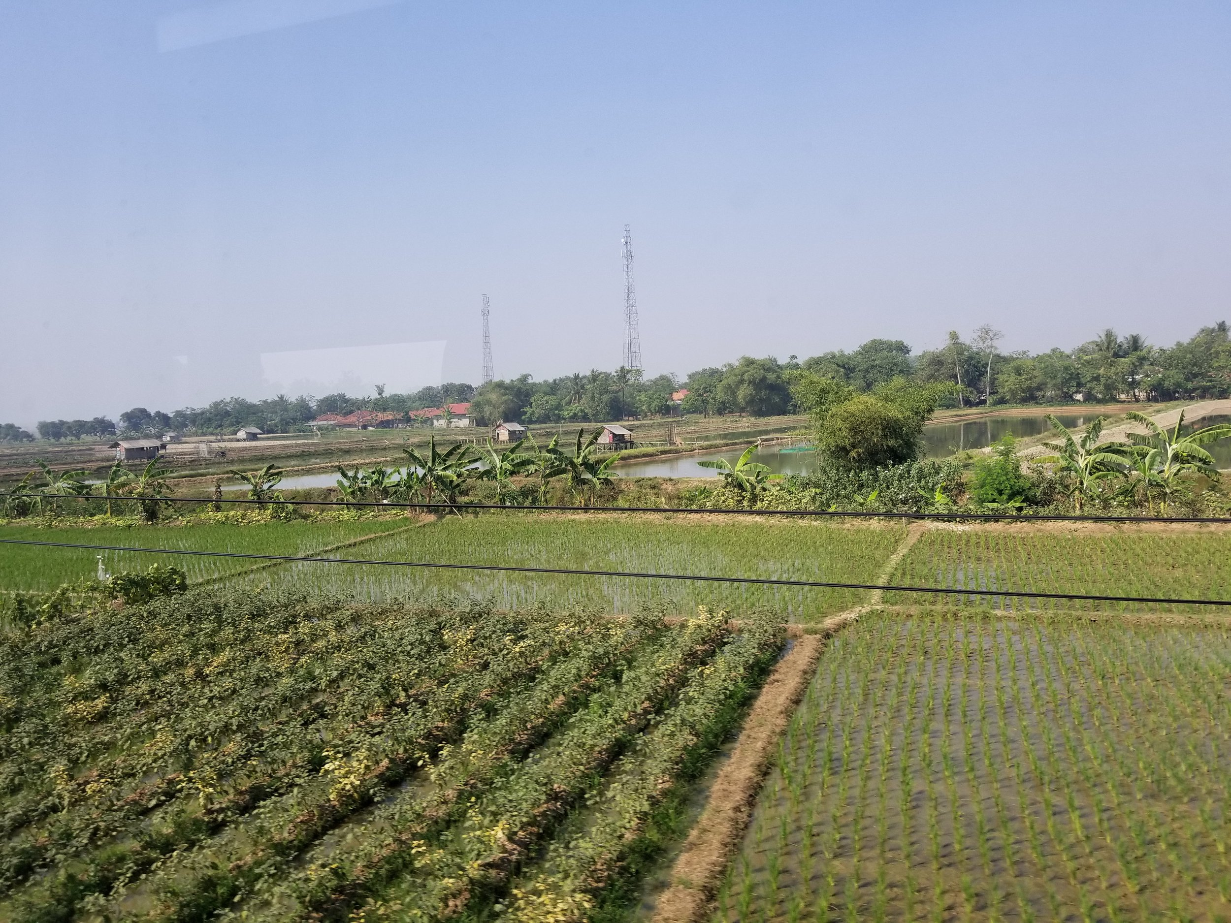 We saw rice field after rice field ....