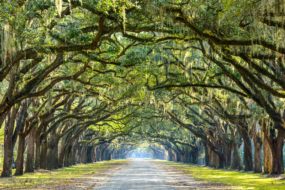 Historical Gems of the South (13 nights) - This road trip will take you along some of the most important and stunning sites of the United States' south. Here, you will be able to enjoy live-music in the birthplace of country music itself, hike parts of the famous Appalachian trail, stroll though charming southern towns, visit old plantations and manors, marvel at some of the most important sites of the civil war and taste good ole' Southern cuisine. This trip will open your eyes to the wonders and beauties of the American South.