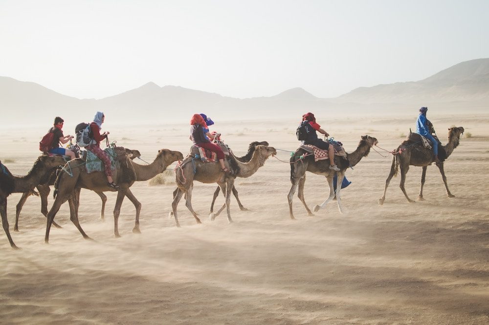 camels waling through the desert.jpg