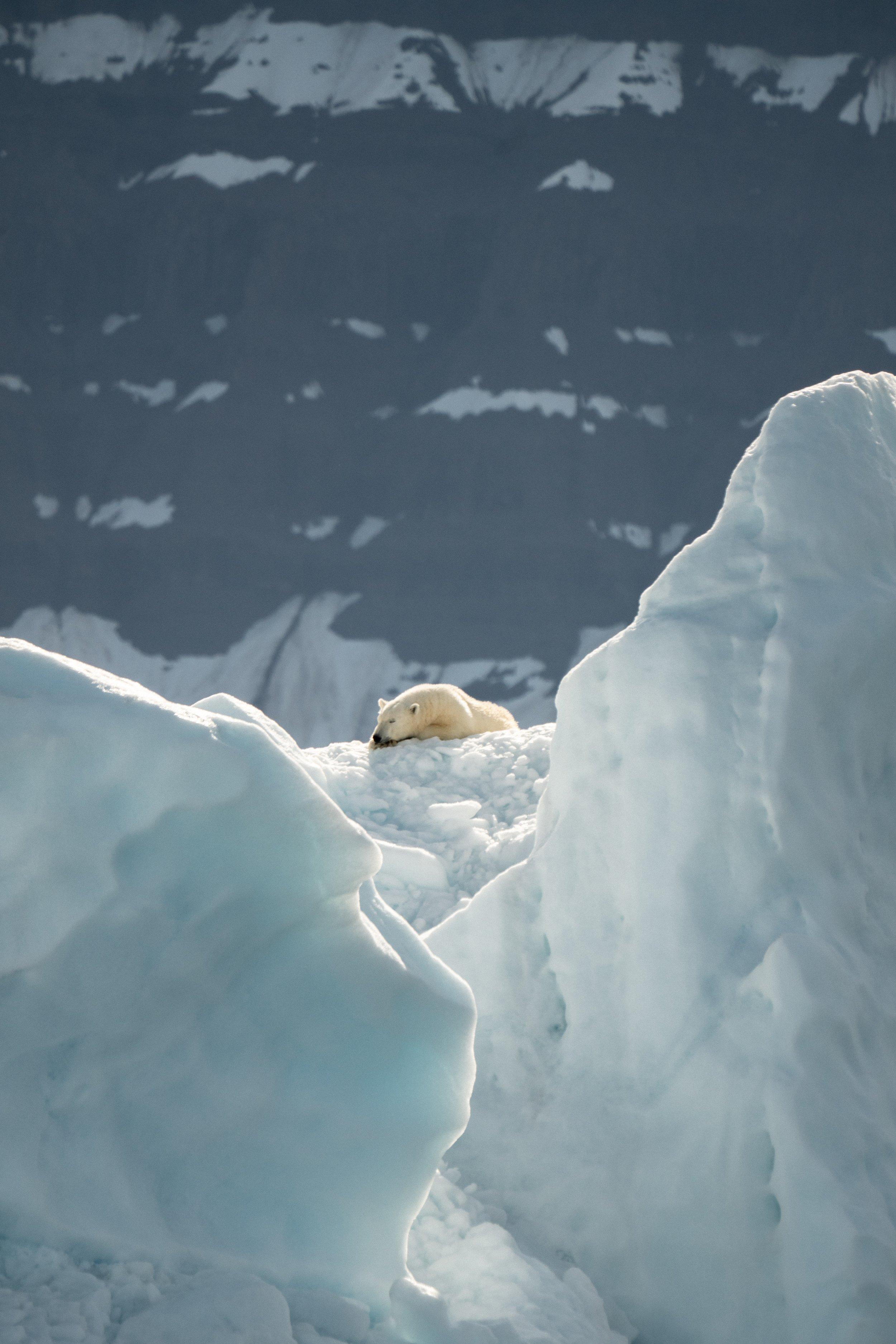 polar bear lying on ice and snow
