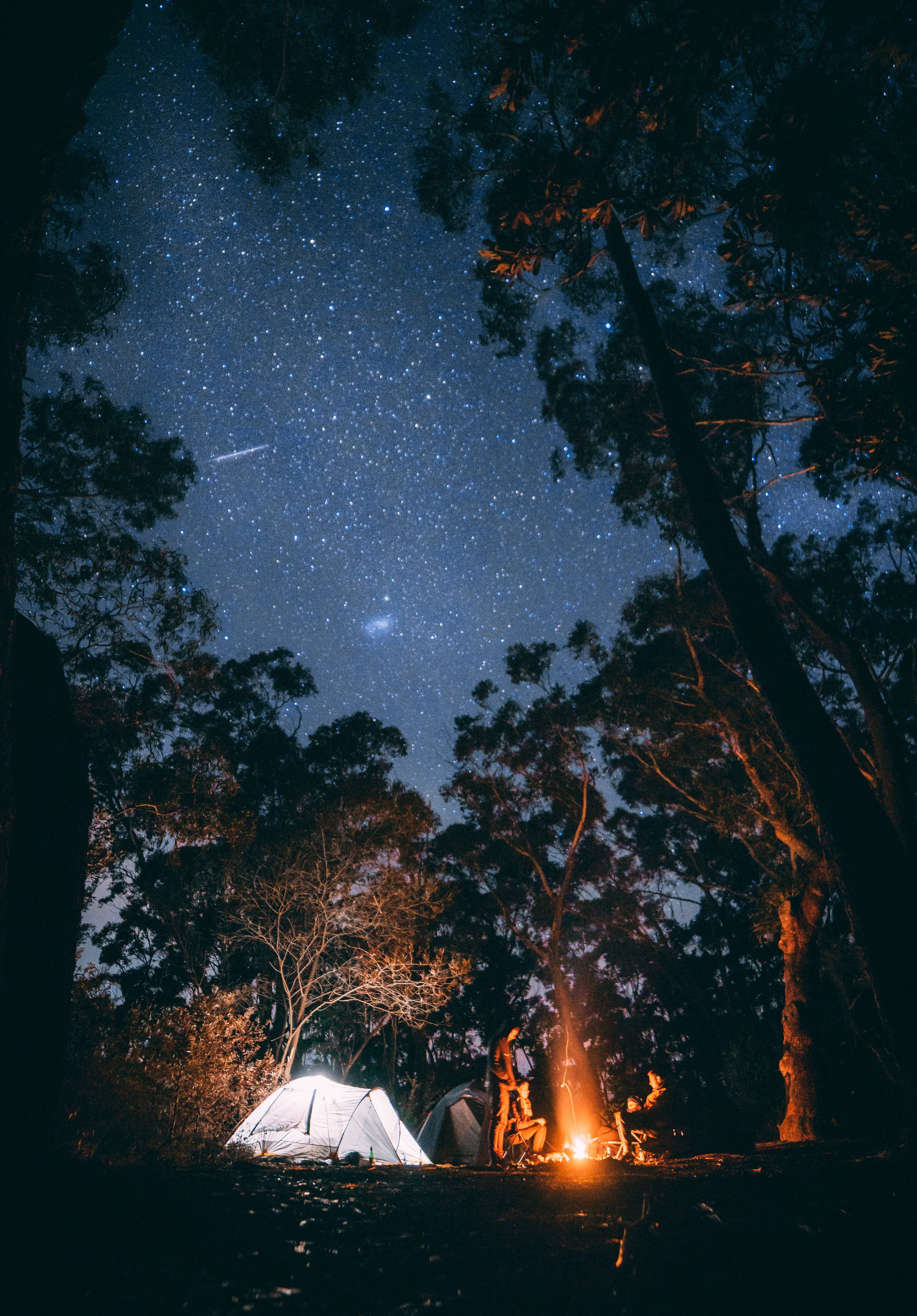 campsite set up under the stars in the forest