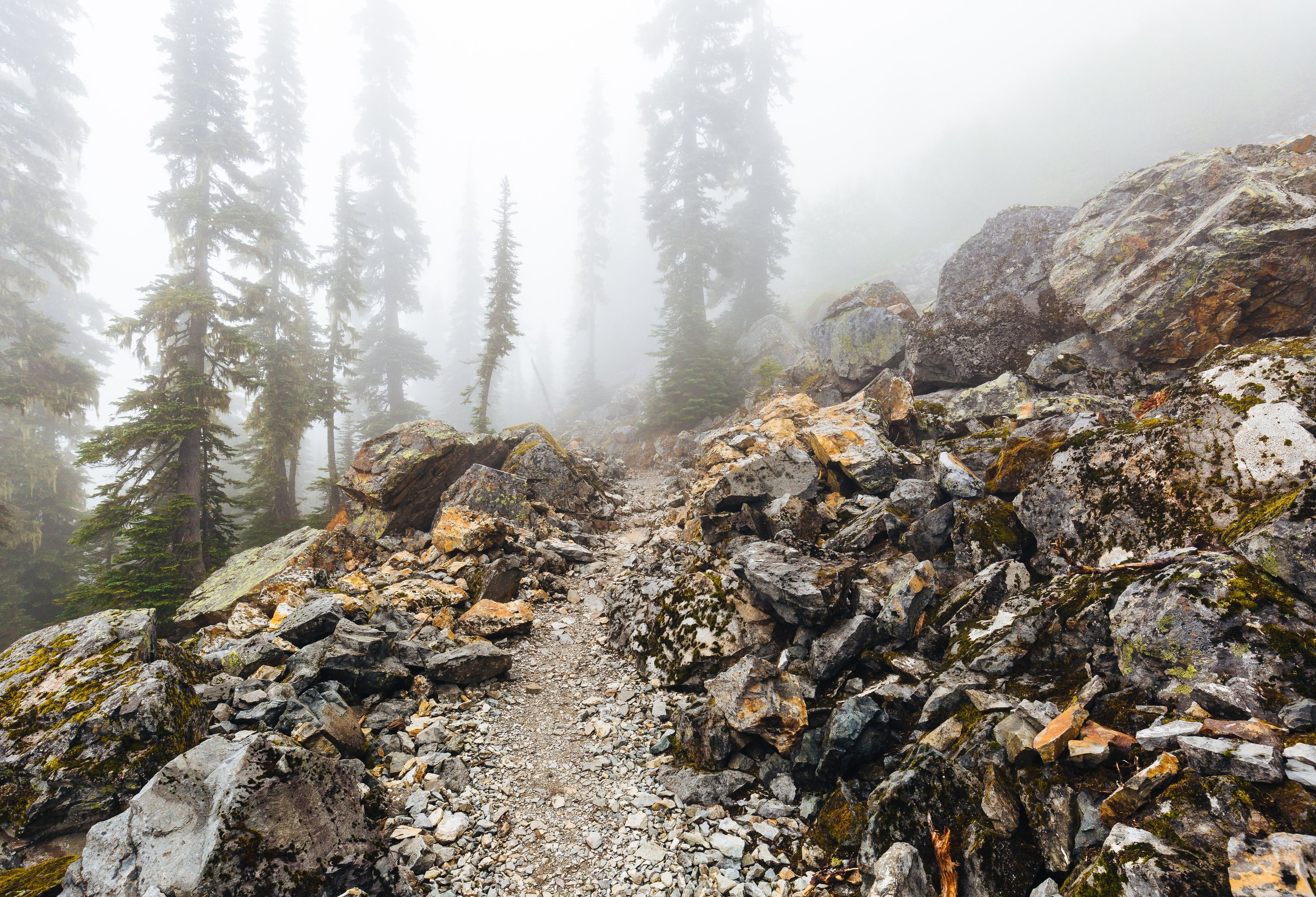 Pacific Crest Trail on a foggy day