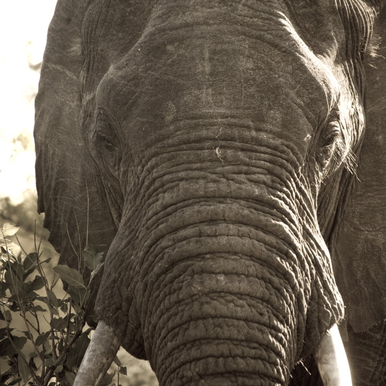 african-elephant-close-up.jpg