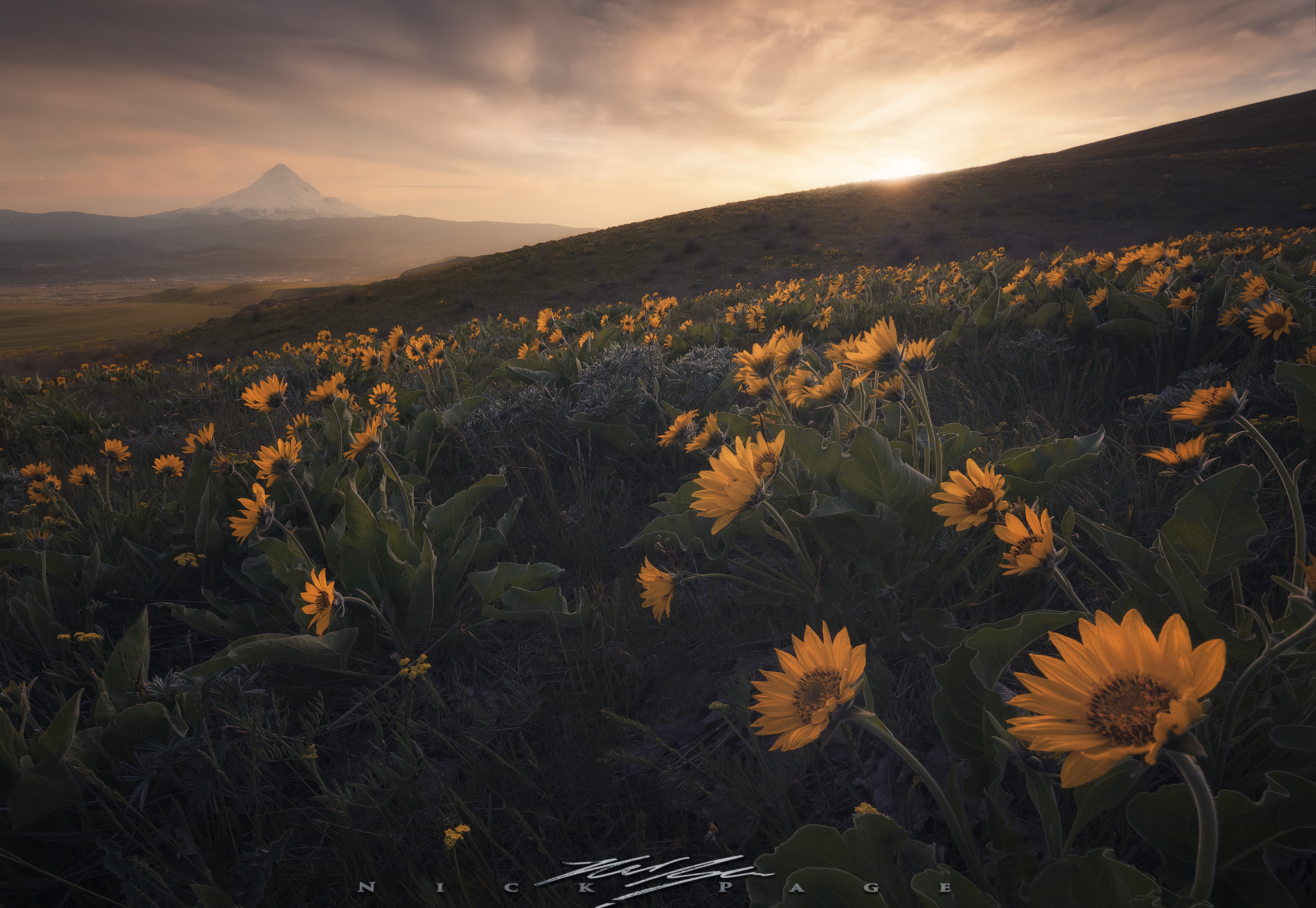 columbia-hills-bloom.jpg