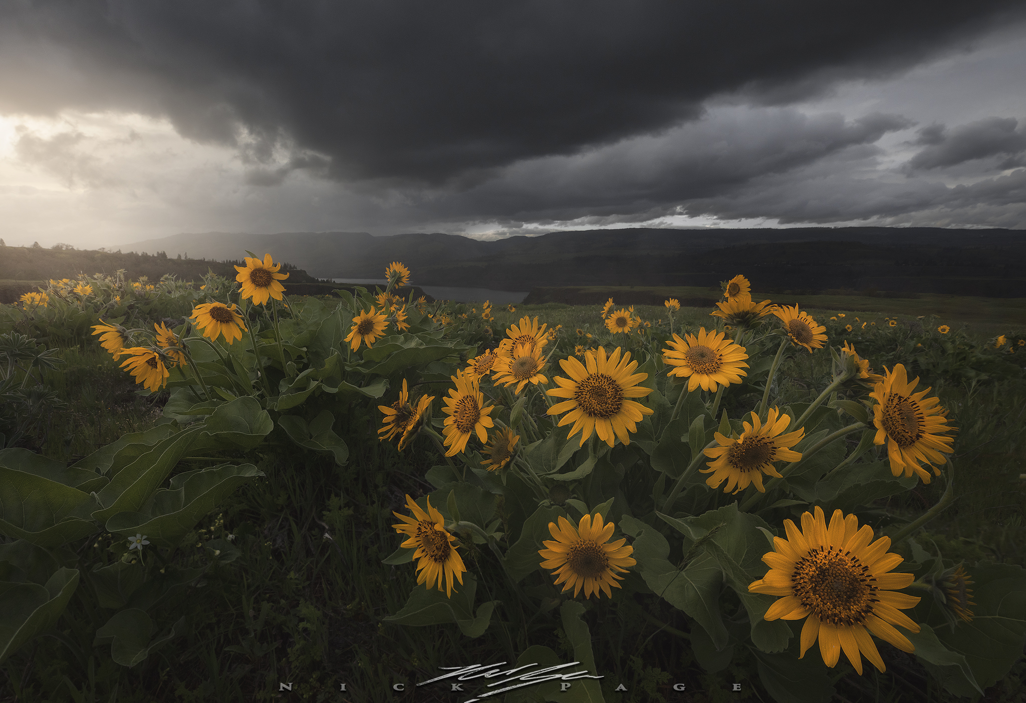 Rowena-Stormlight.jpg