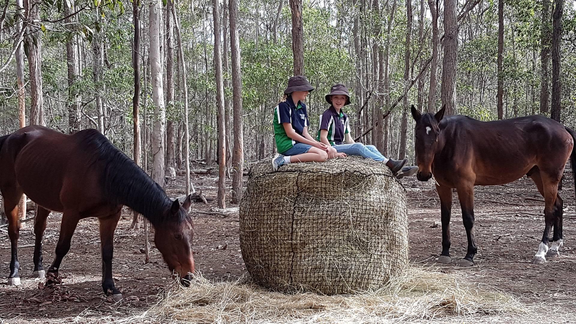 Com & rec horses.jpg