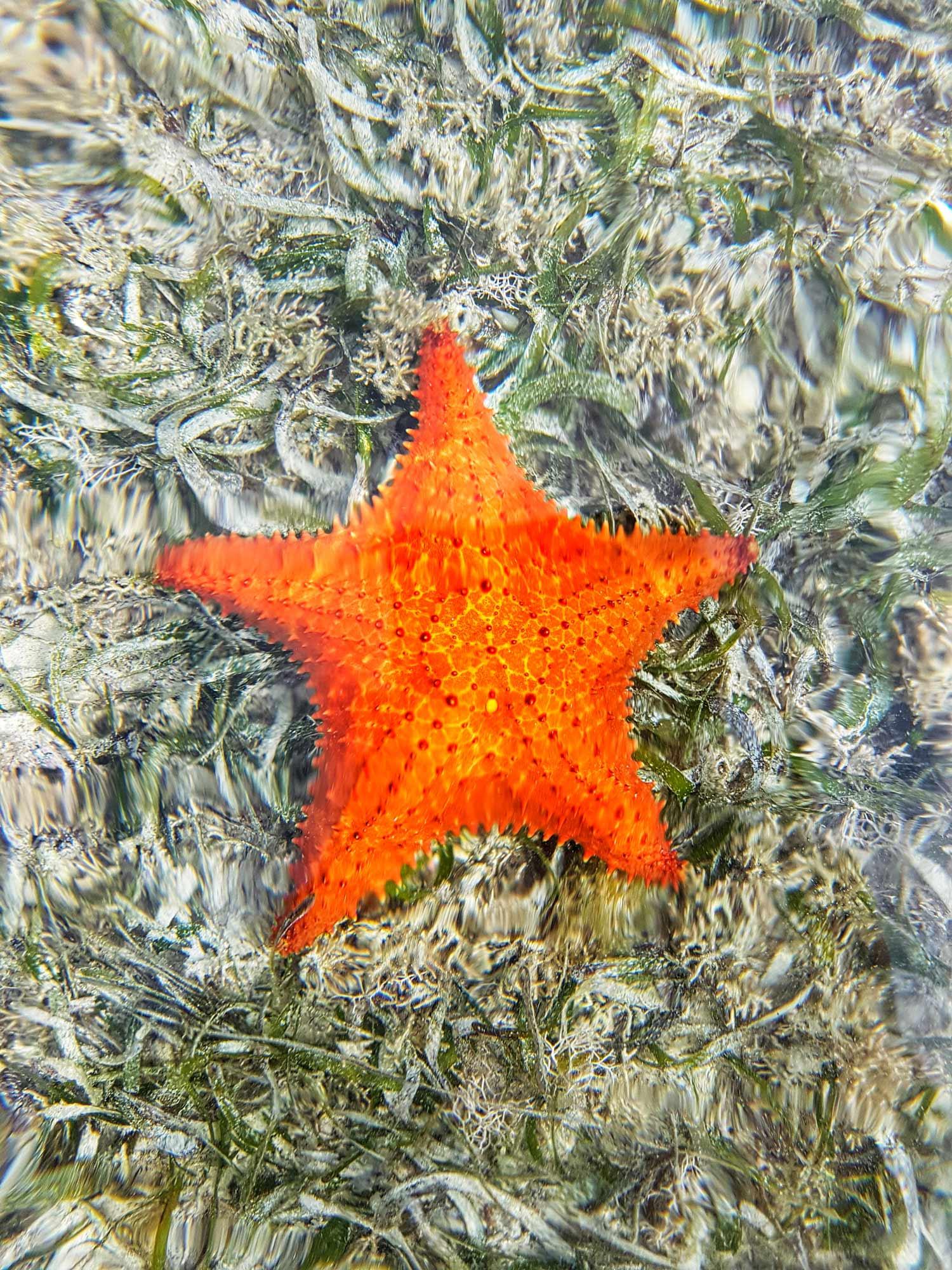 nature-starfish-claudiab.jpg
