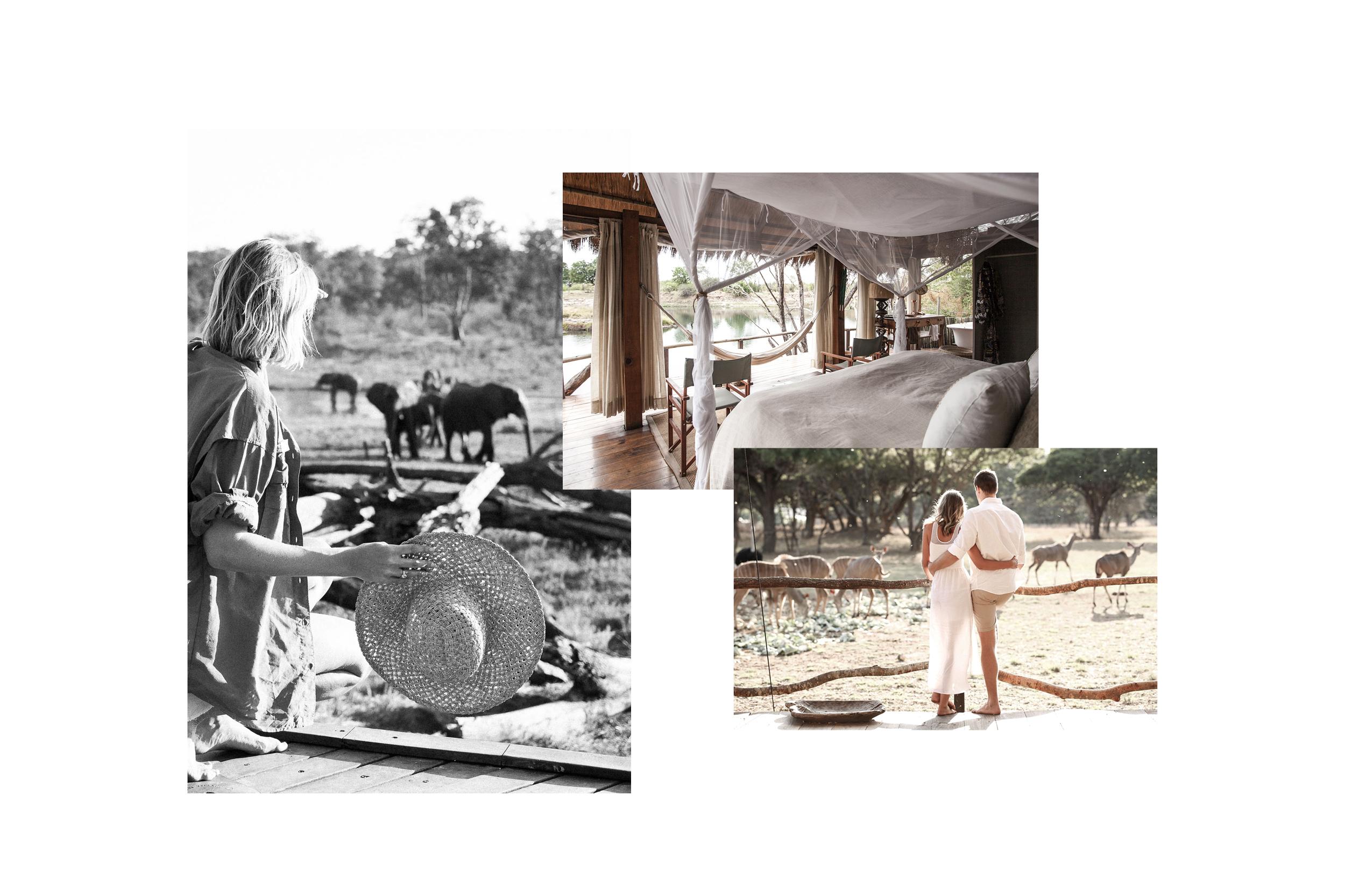 Bow & Arbour Safarimoon