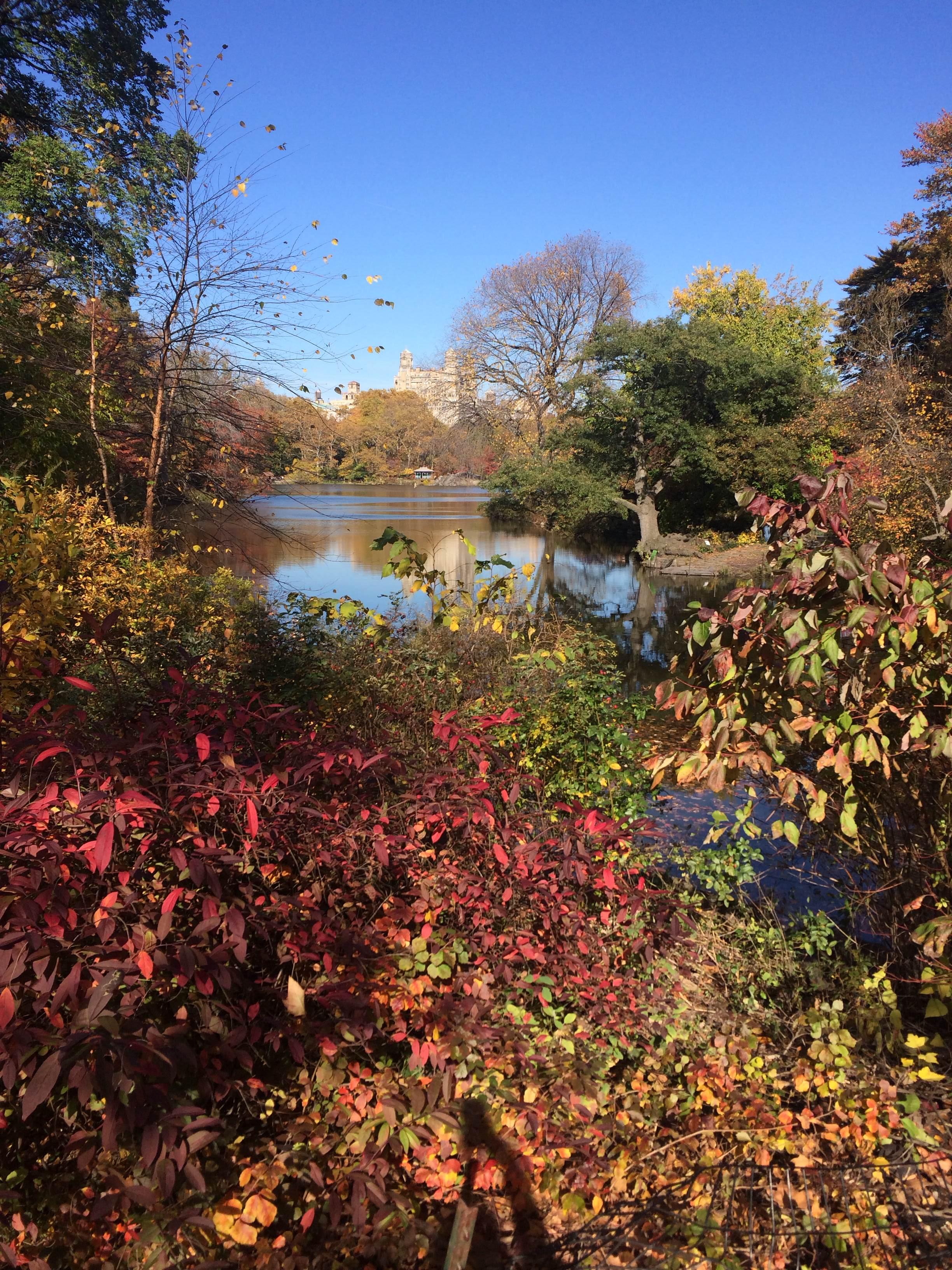 Beautiful-Central-Park.jpg