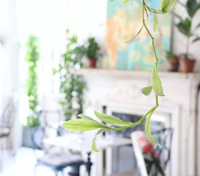 Don't leaf us hanging. 🌱 #botanicalpickmeup