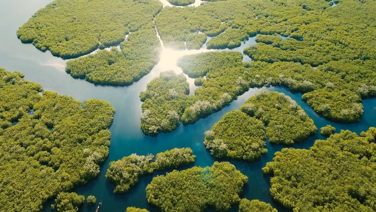 Mapping Mangroves - A video for The Nature Conservancy, IUCN & Cambridge University →