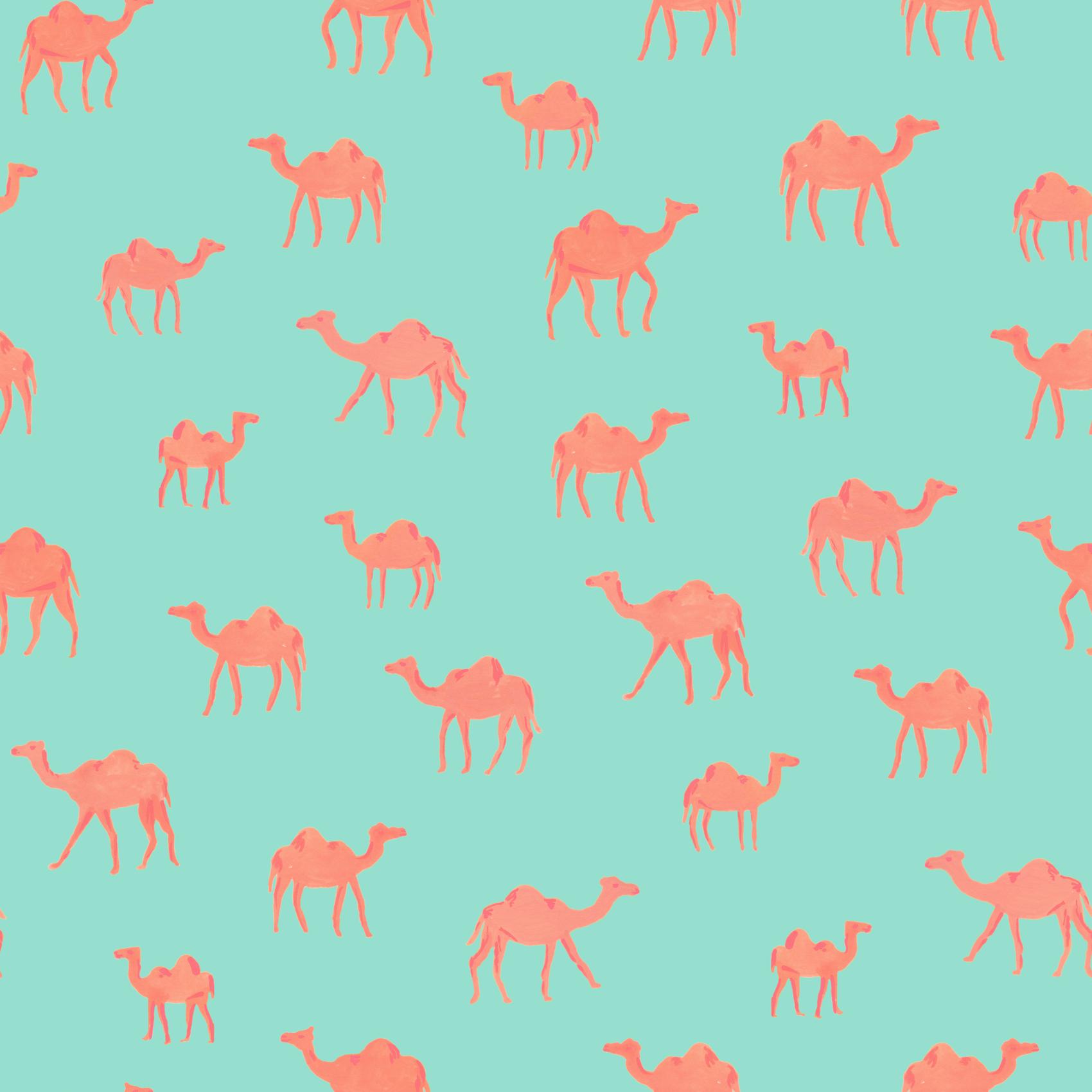 Skye McNeill_Camels