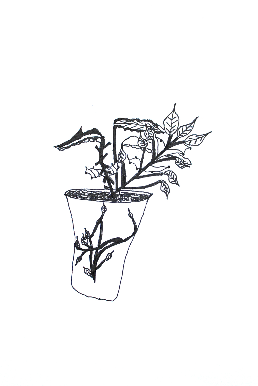 Plant in Plant Pot