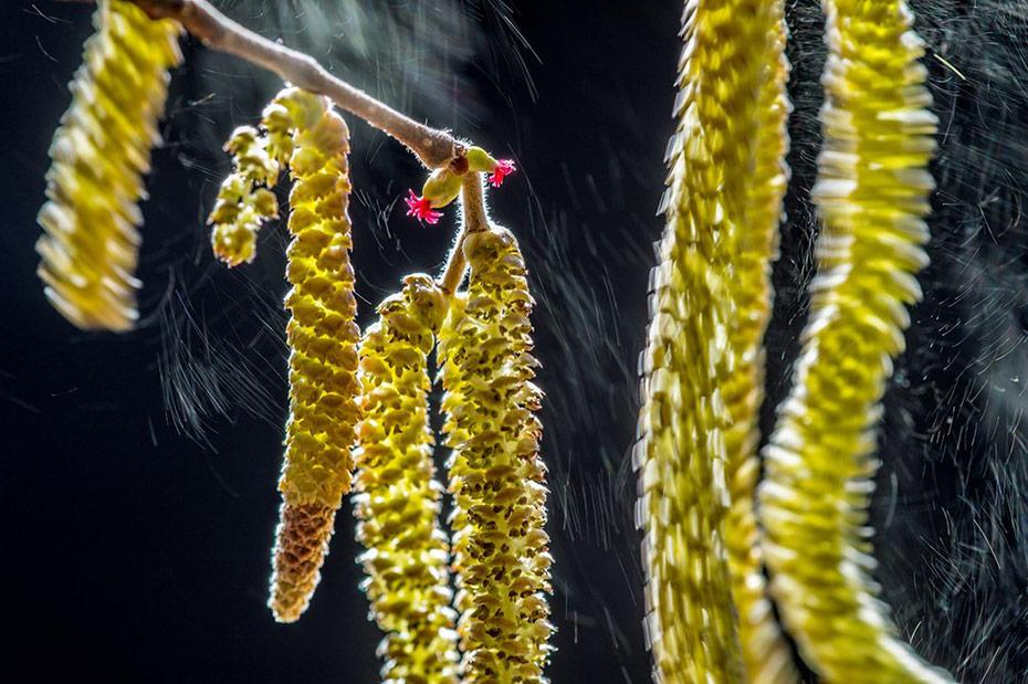 5-wildlife-photographer-of-the-year-winners.jpg