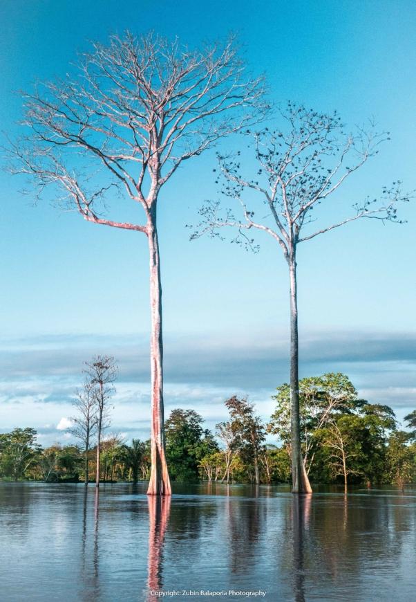 Tranquilo Trees