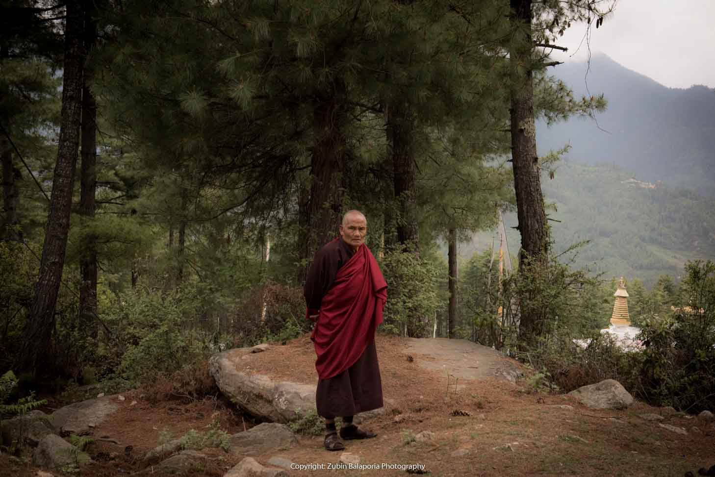 Nature's Monk