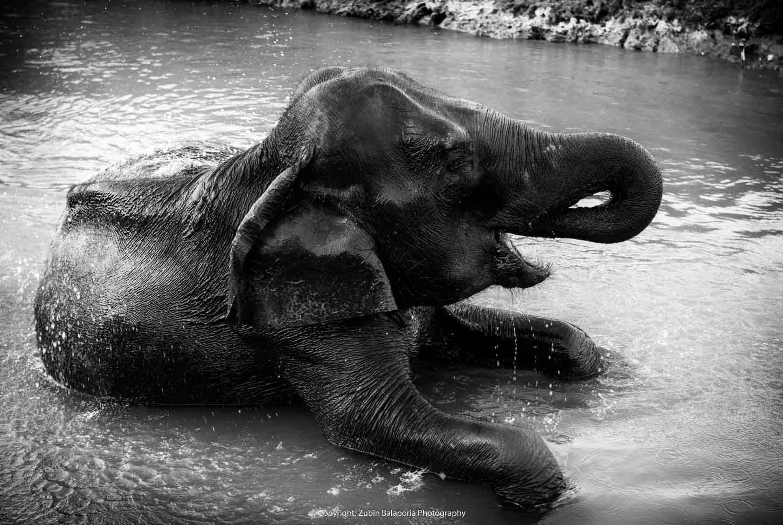 KAP Elephant Sauna 03 BW16.jpg