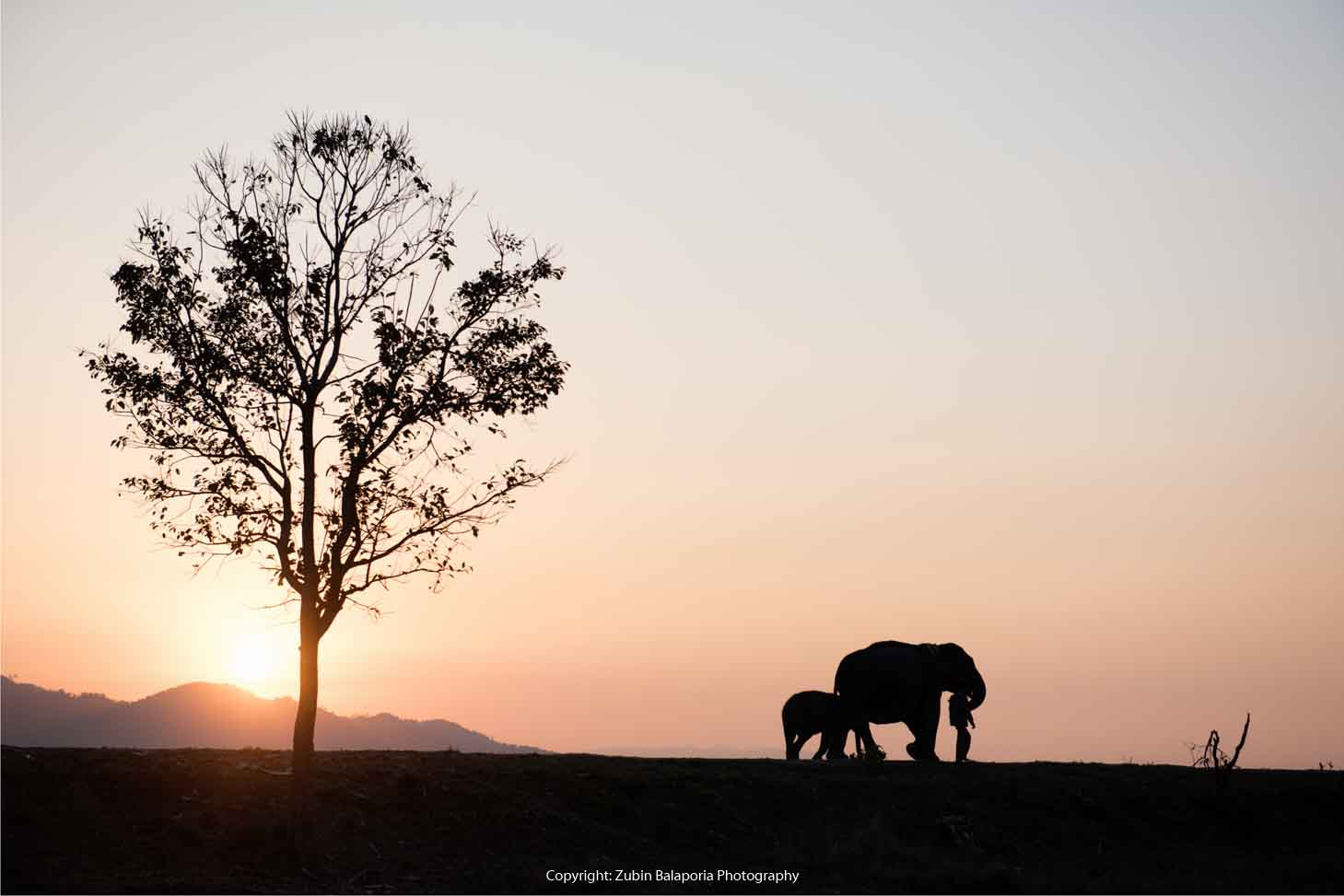 KAP Elephant Sil 07.jpg