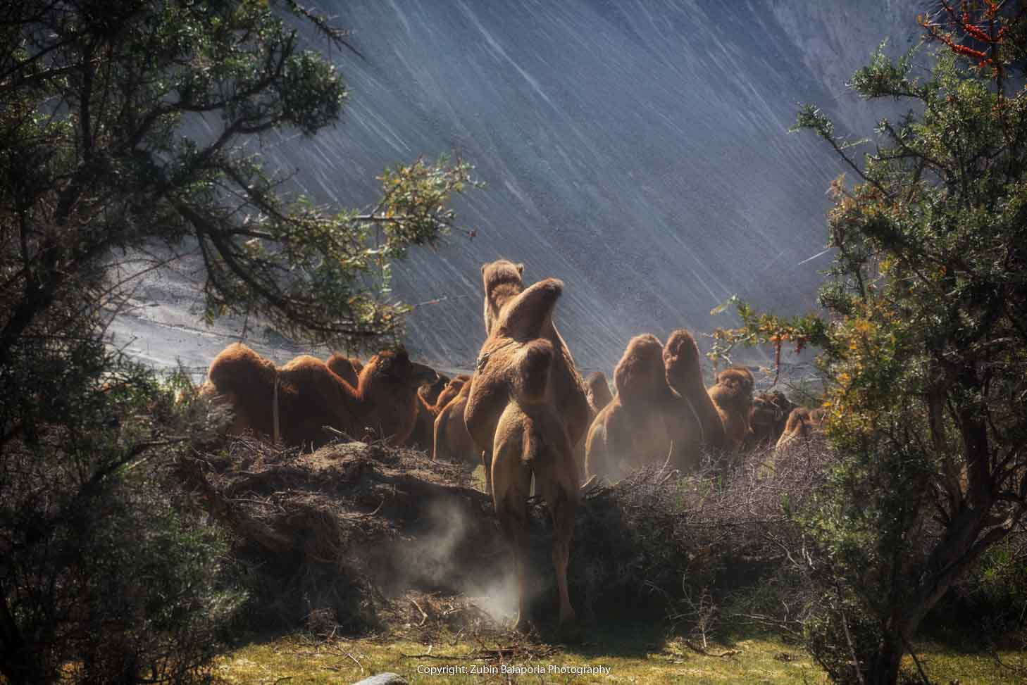 Camel Hump Hurdle