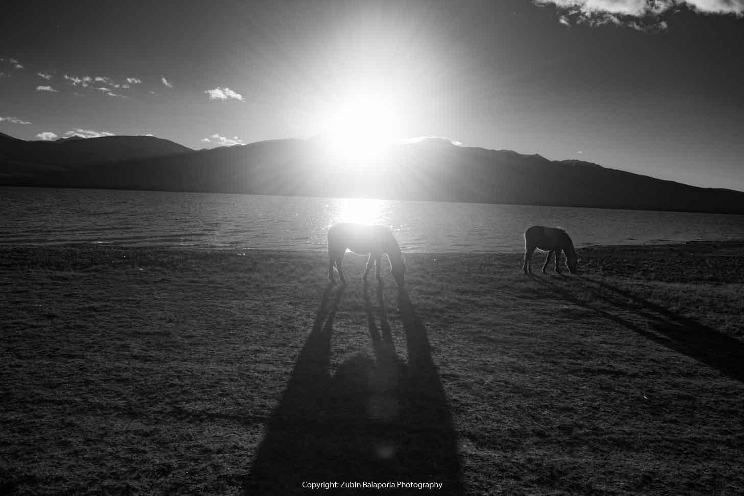 Tsomoriri Horses 02