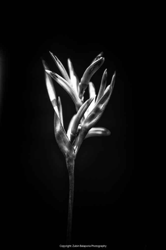 Flower 01 BP
