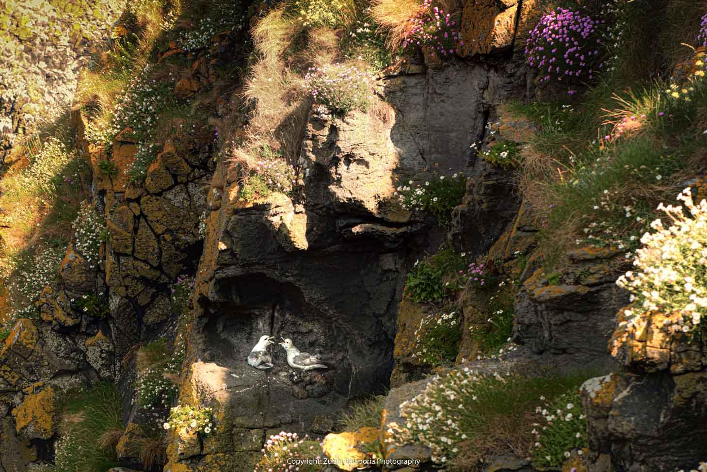Cliffs & Egrets