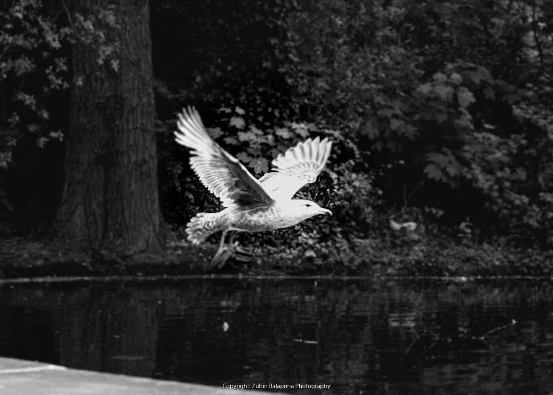 White in Flight