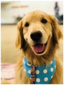 Bailey the Therapy Dog will join us again in 2019!