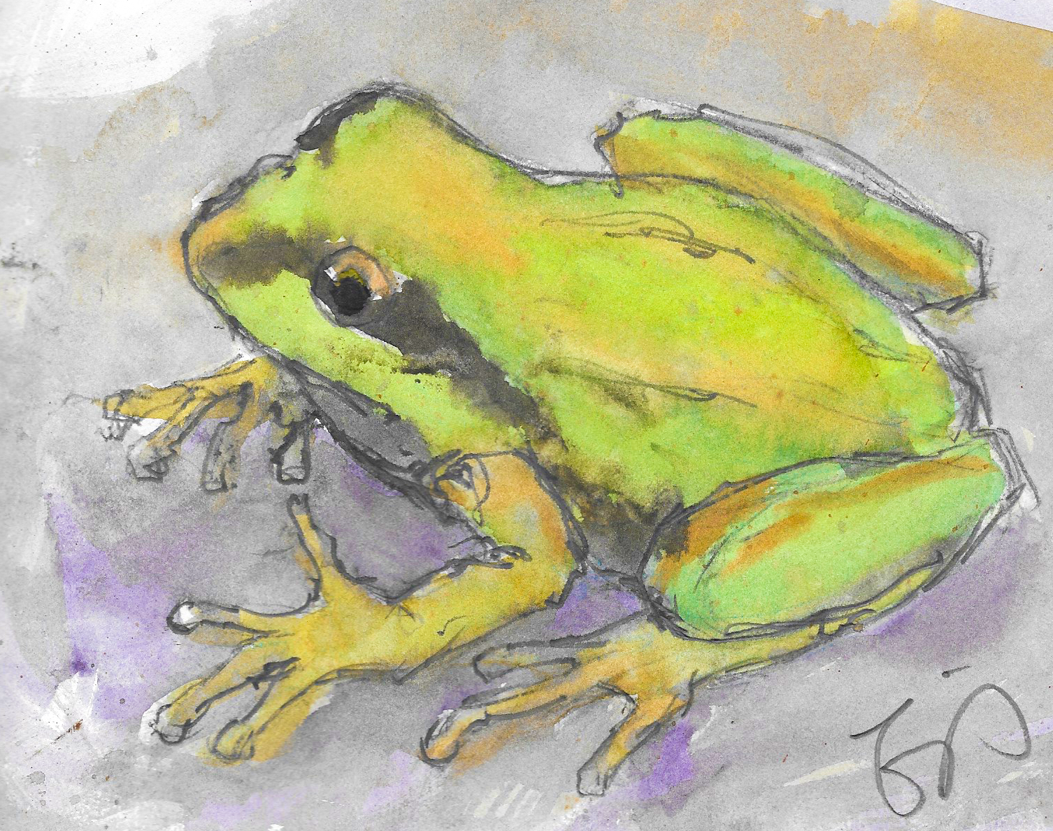 A Pacific chorus frog. They're loud and proud.
