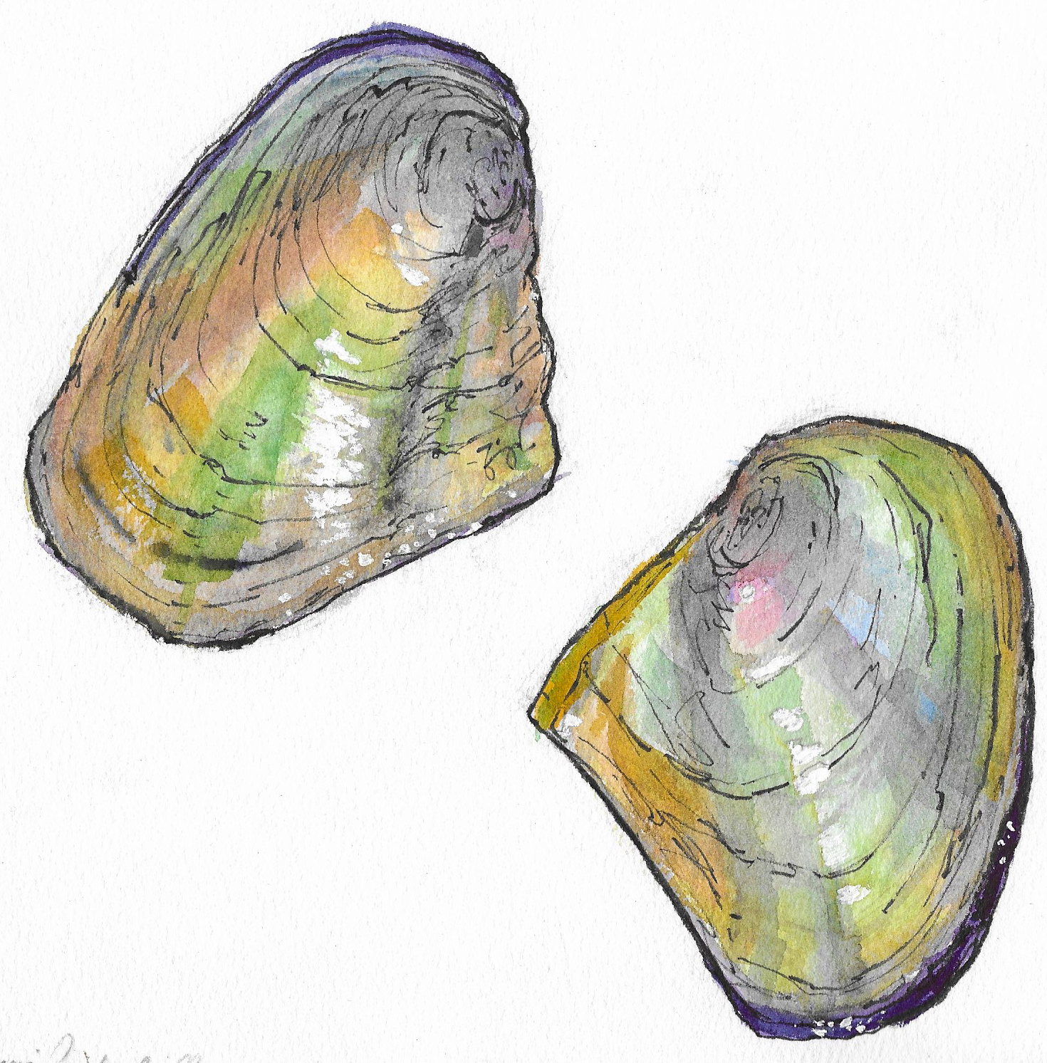 Maidens (California floater mussels)