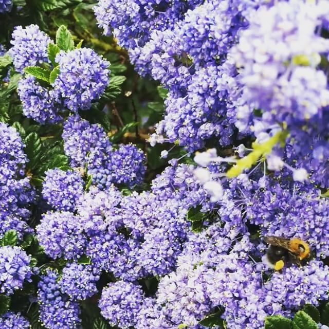 36 hours of city-quiet, noticing details, spotting new shoots and appreciating the hell out of nature 🌿 . . . . . #ArtistAsWorker #Freelance #SelfEmployed #Details #SmallPleasures #Connection #BackToBasics #TakeTime #SlowDown #DogsOfInstagram #Bees #TheLittleThings #NewShoots #MentalHealth #SelfCare #Rest #Mindfulness #Walking #GetOutside #FreshAir #Nature #Therapy #DeepBreath #NatureIsAmazing #Animals #GreenSpace #FreshAir #NewShoots #InnerCity #Park #Woodland #Sheffield