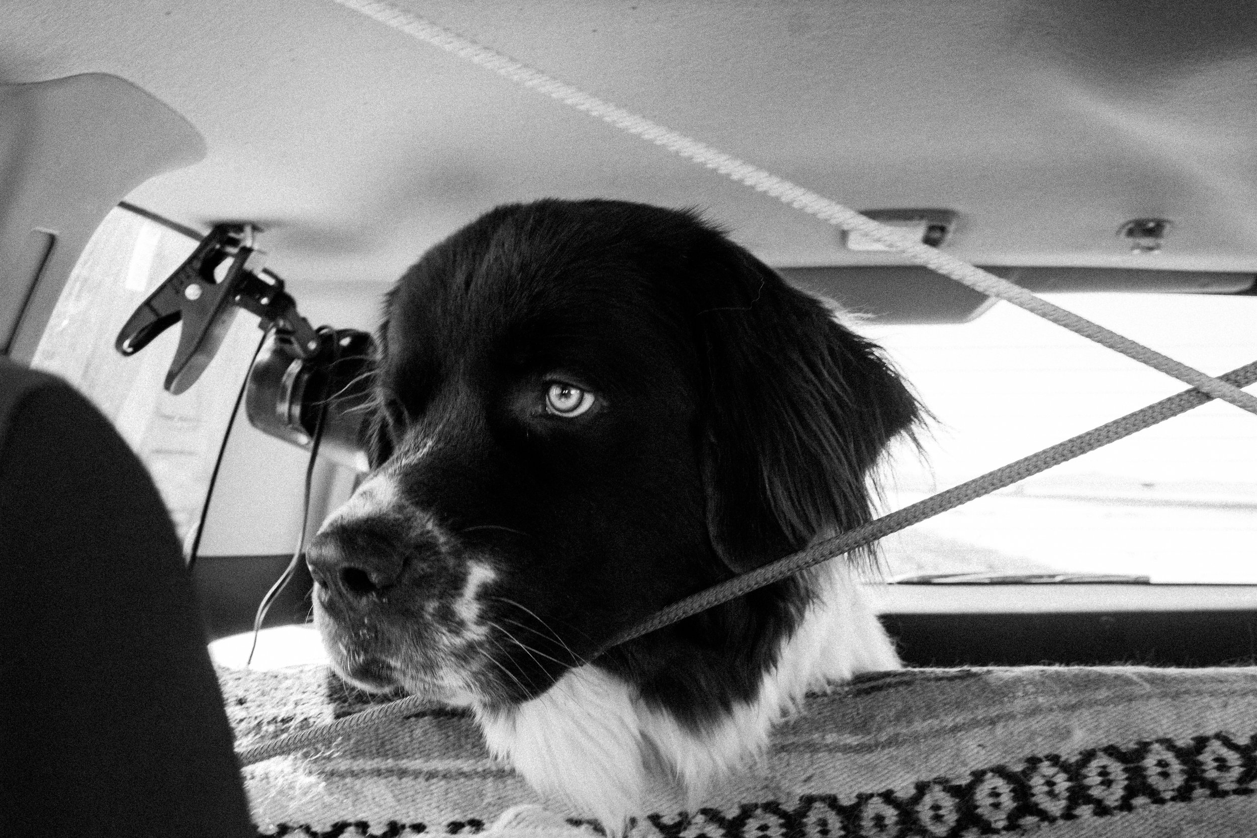 PNW Road Trip Lifestyle Adventure Photographer With A Newfoundland Dog
