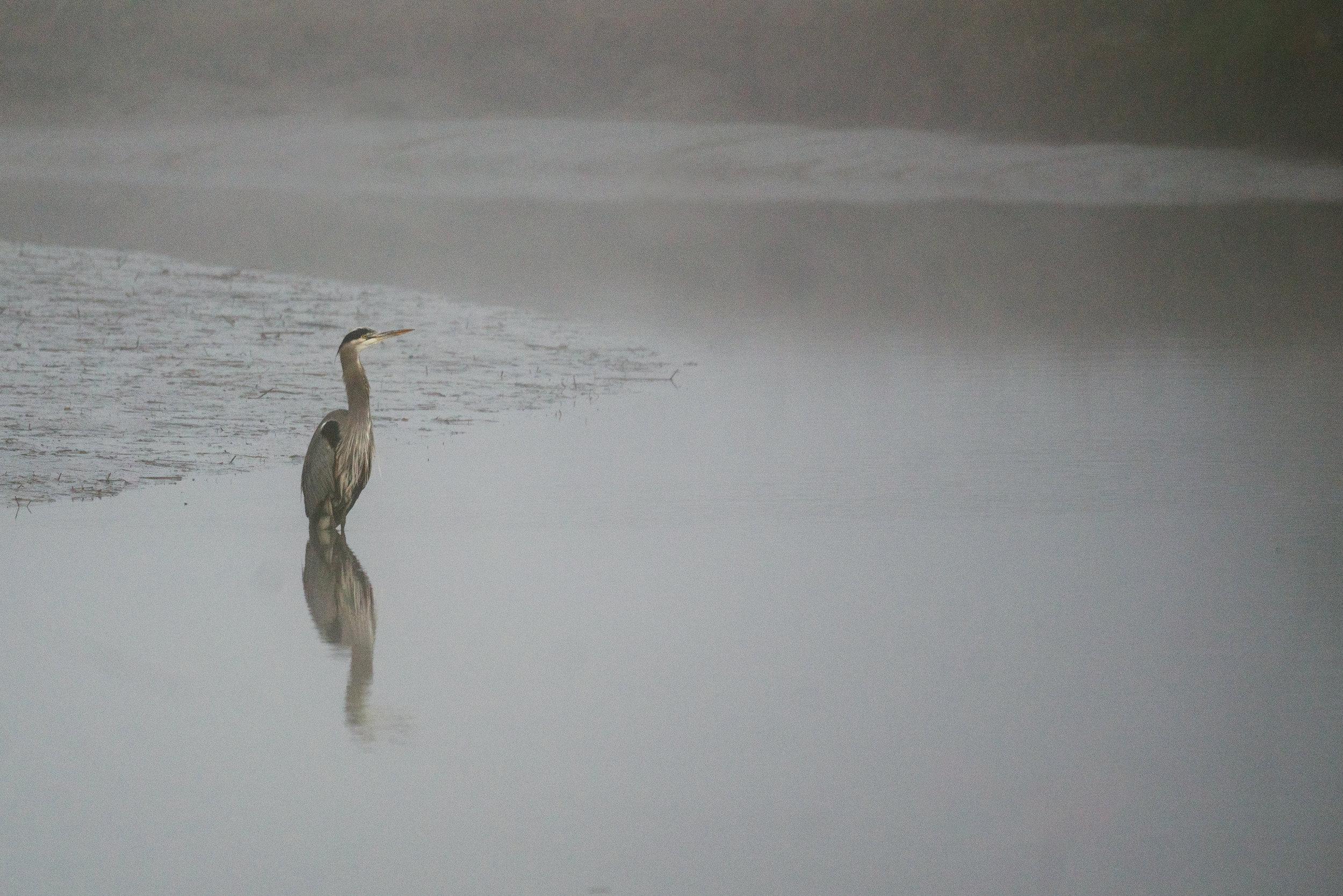 Seattle, Washington Wildlife Photography