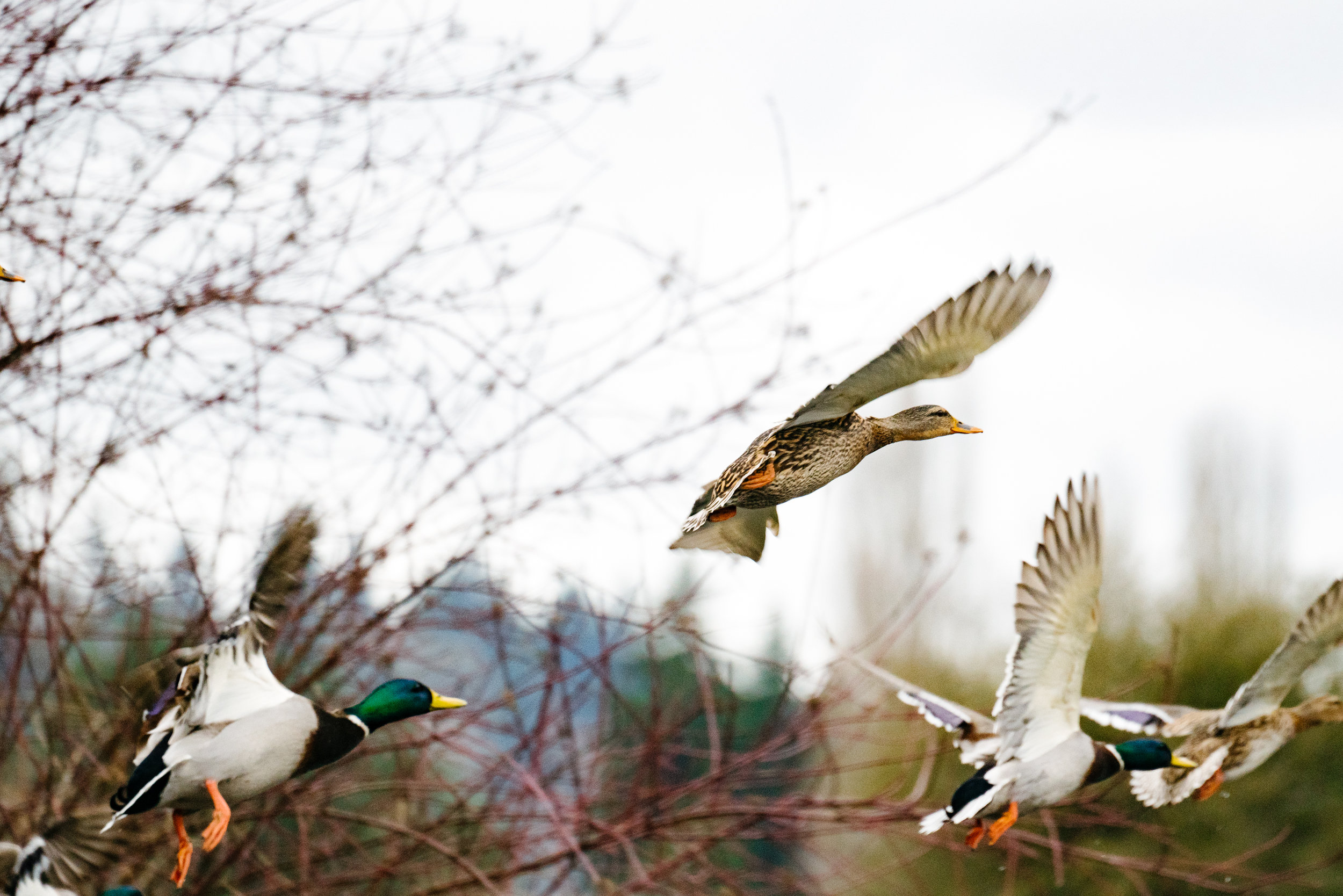 Seattle, Washington Editorial Photography
