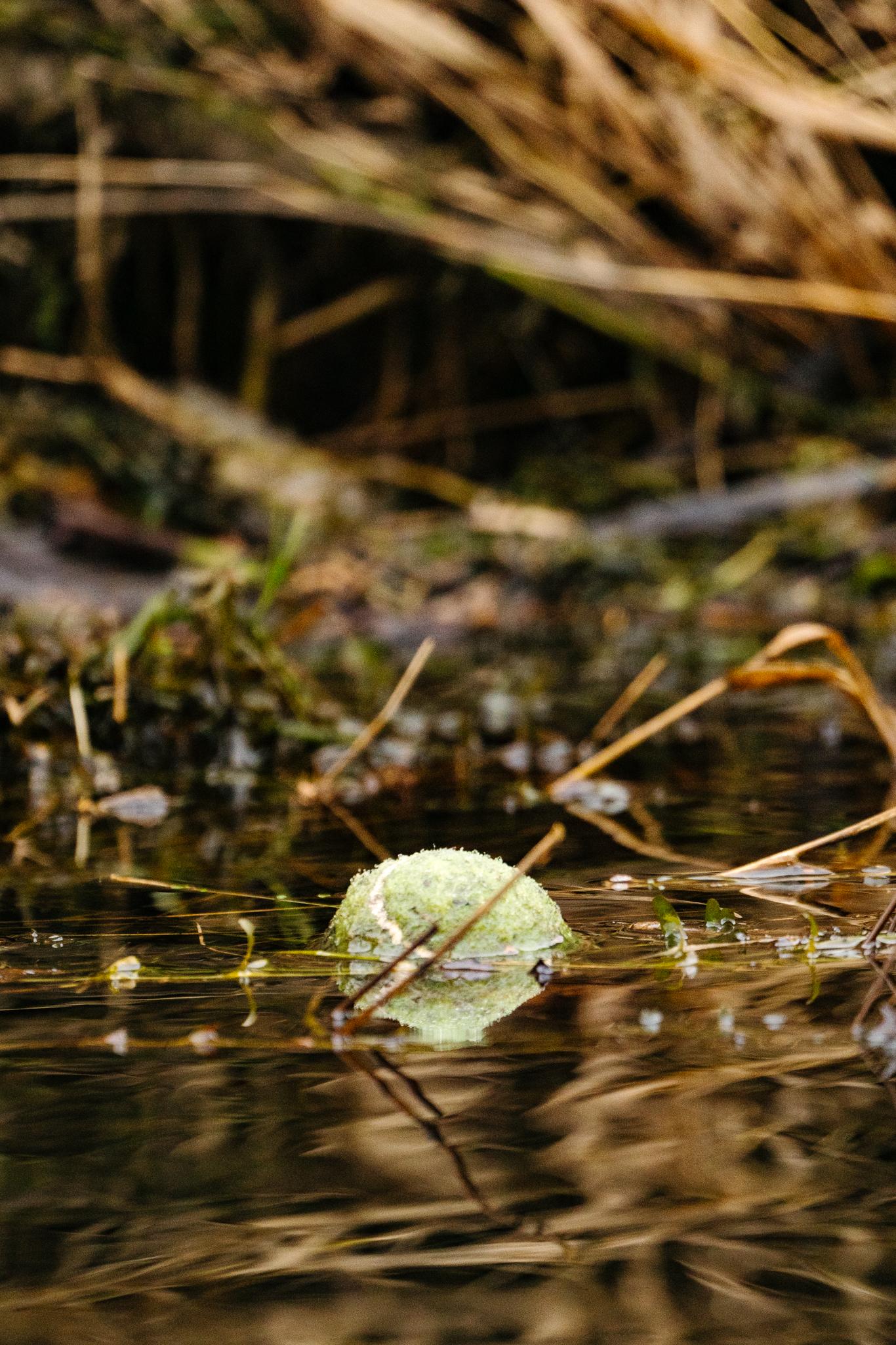 Washington State Environmental Conservation Photographer