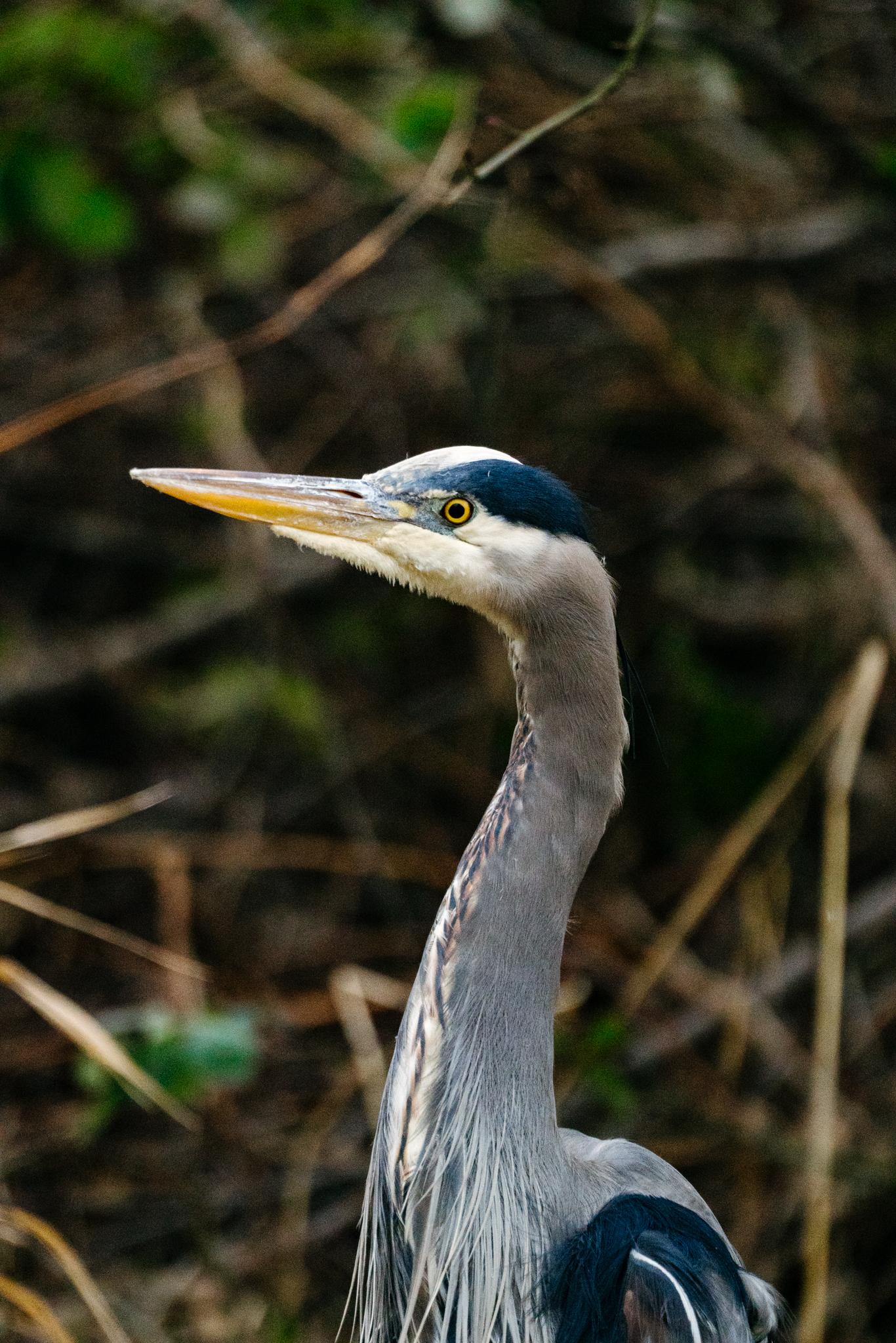 Best Seattle Wildlife Photographers