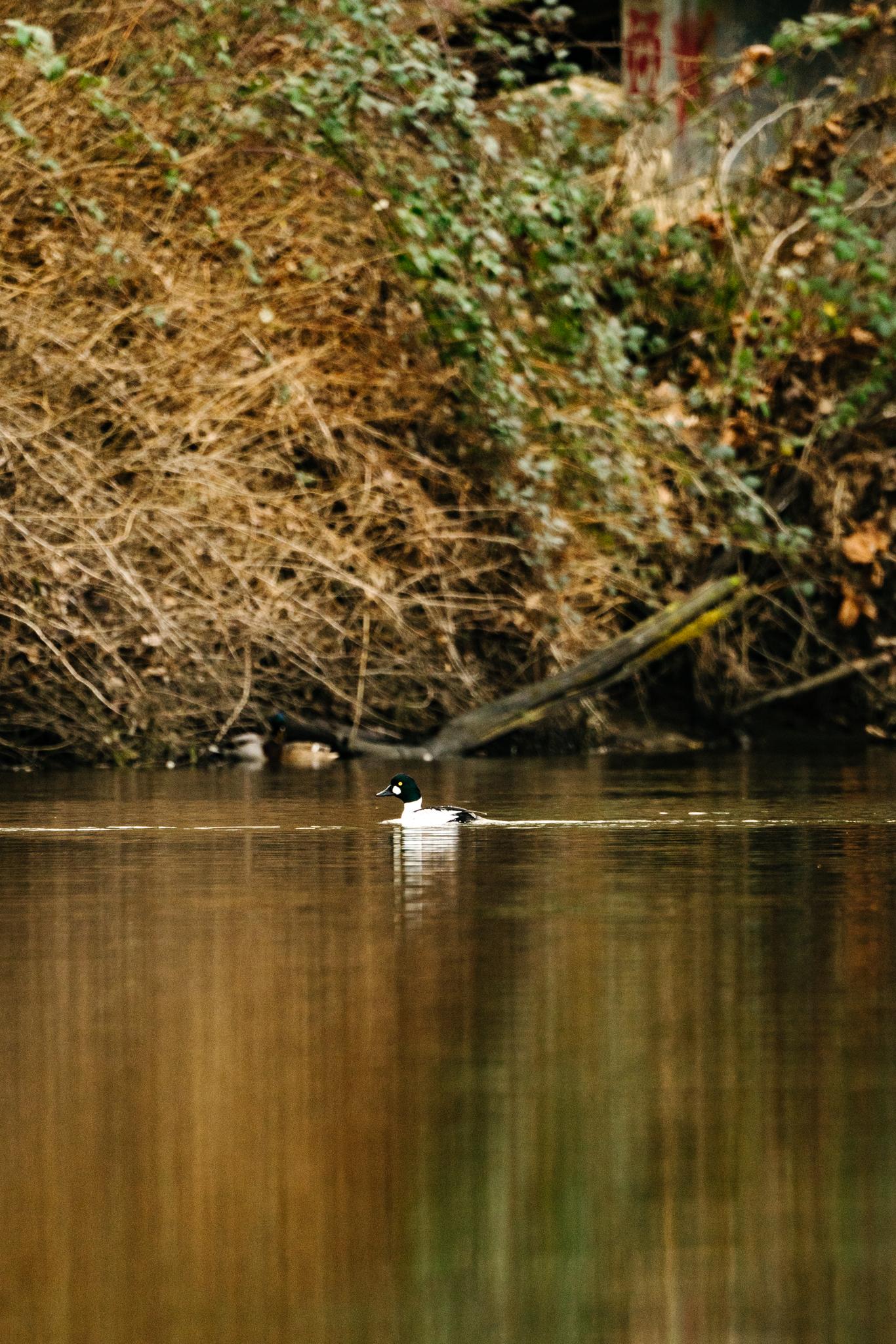 Seattle Wildlife Conservation Photographer