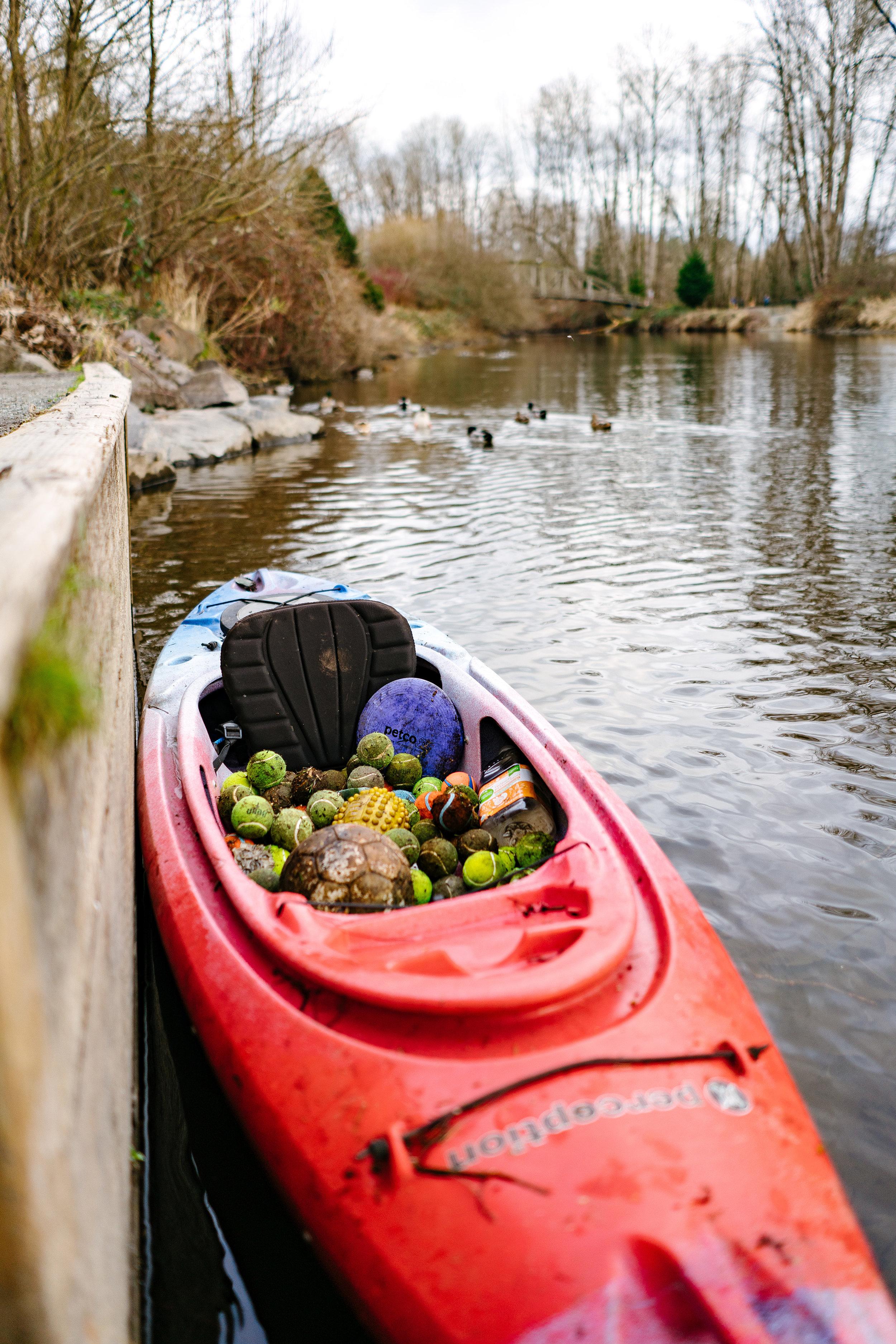 Wildlife Conservation Photographer based in Seattle, Washington