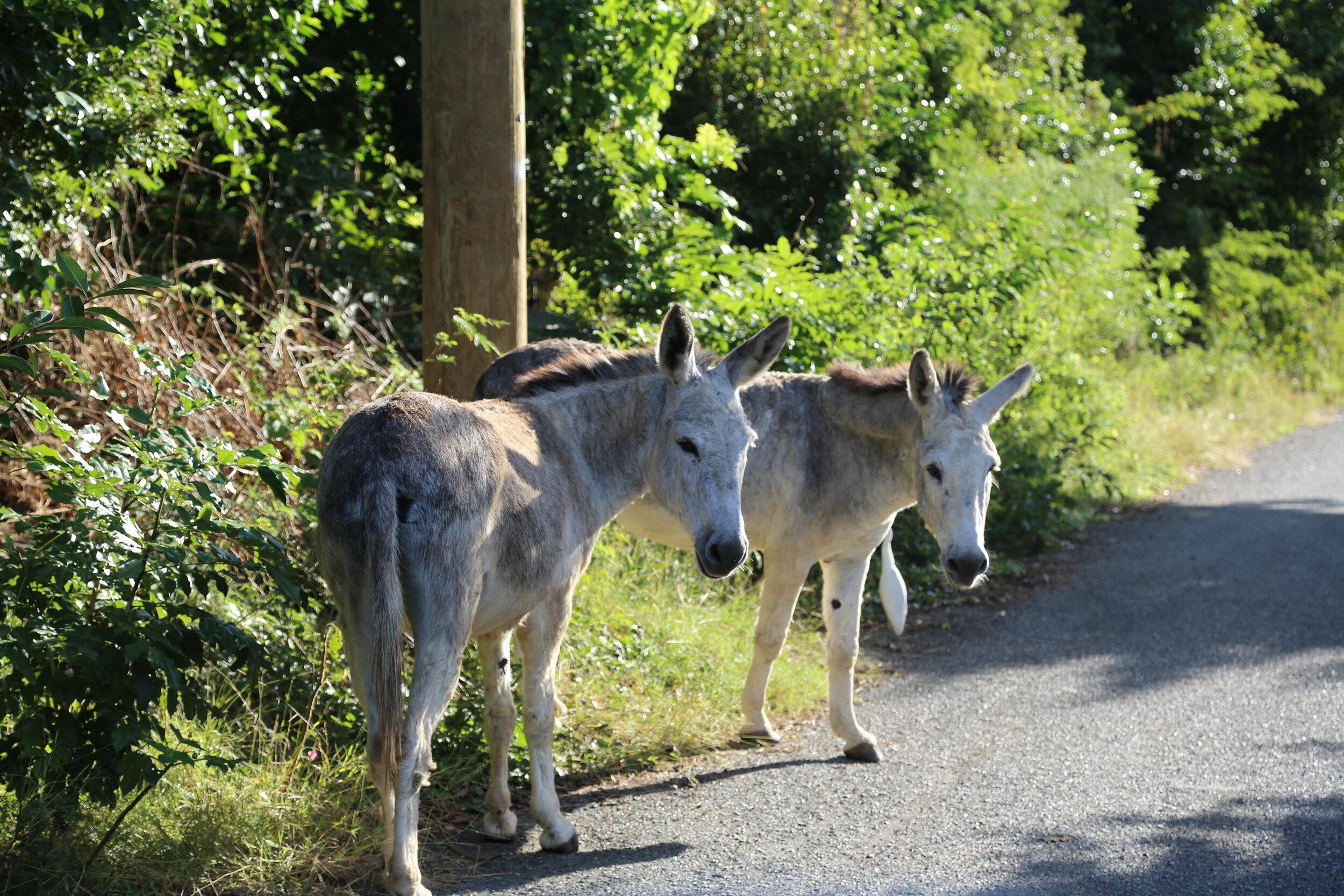 coral bay donkeys.JPG
