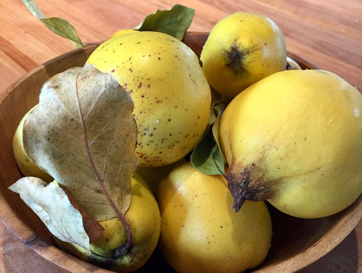 several-quince-in-a-wood-bowl.jpg