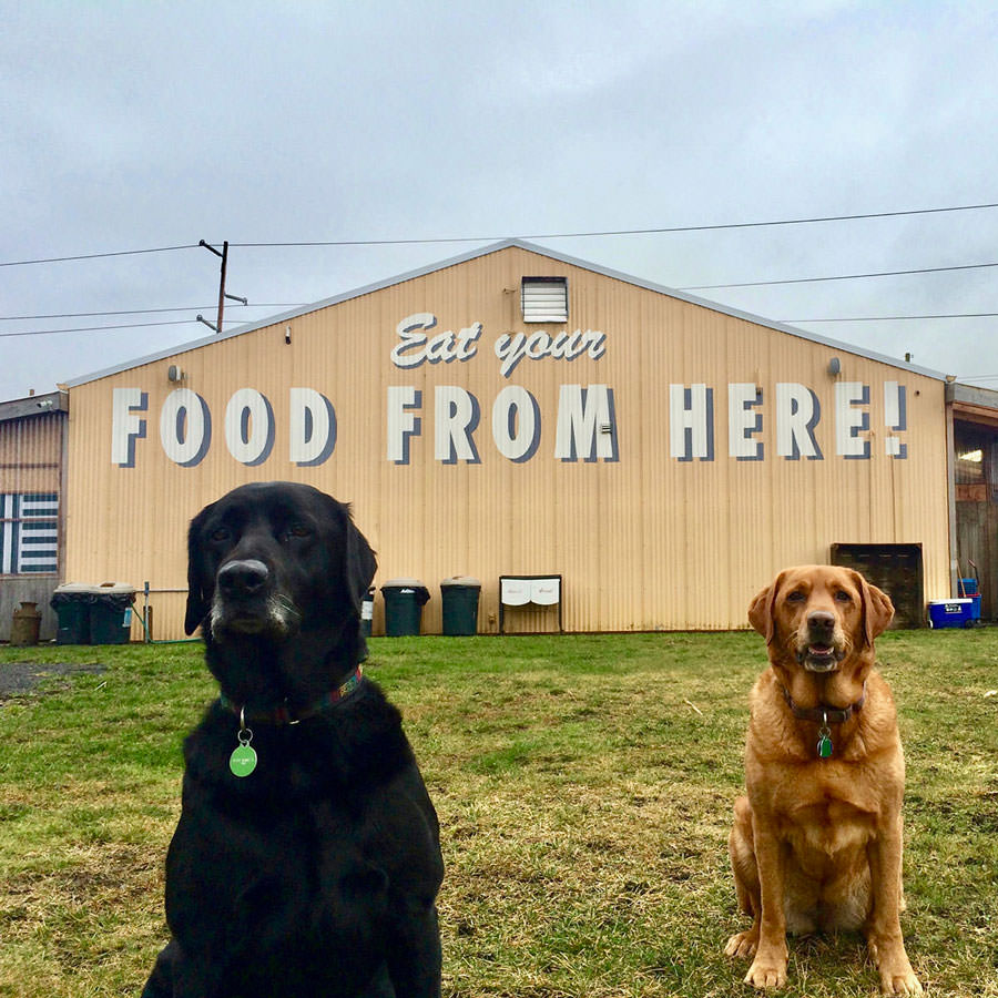 Pets: - There's nothing like a big fresh local beef bone from Short's Family Farm for a canine friend! Our Chimacum bandanas make handsome dog attire and when you are at the register, be aware that there is a little jar of organic treats!