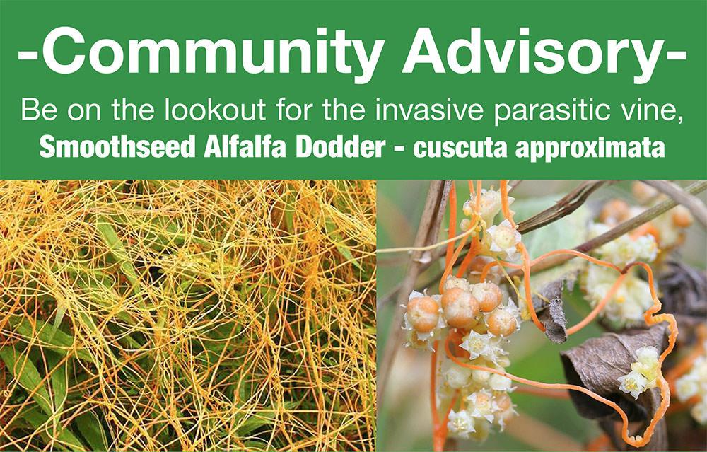 Dodder advisory photo.jpg