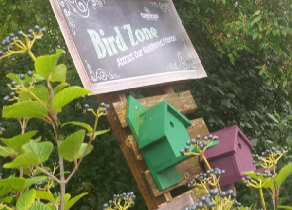 birdzone.jpg
